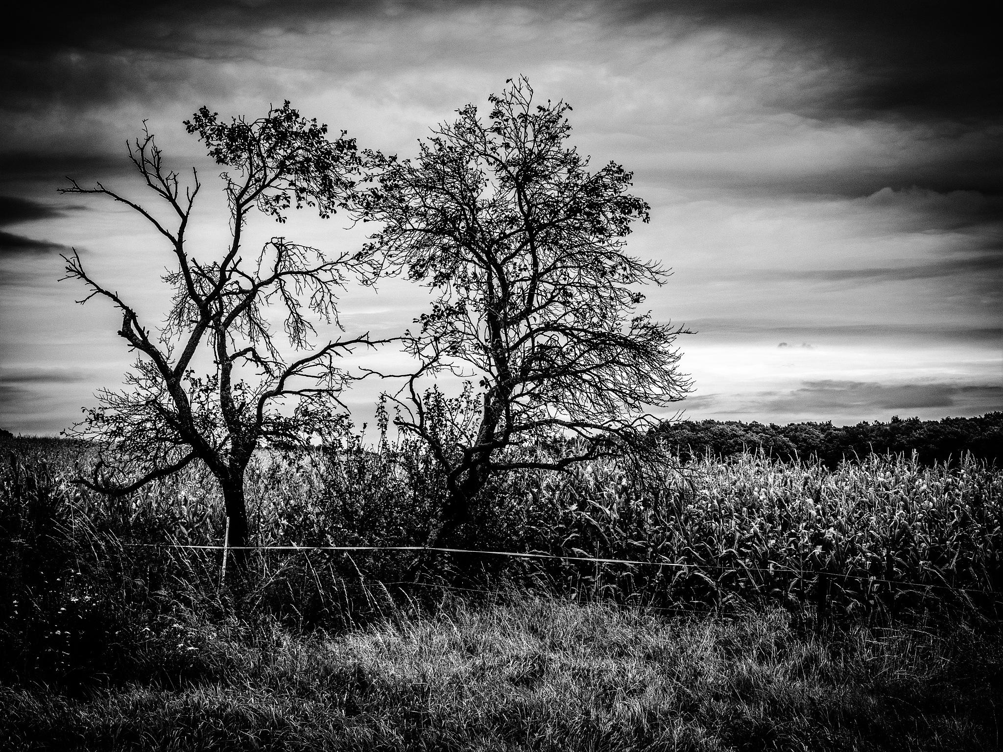 Landscape in bw by Brigitte Bohlscheid