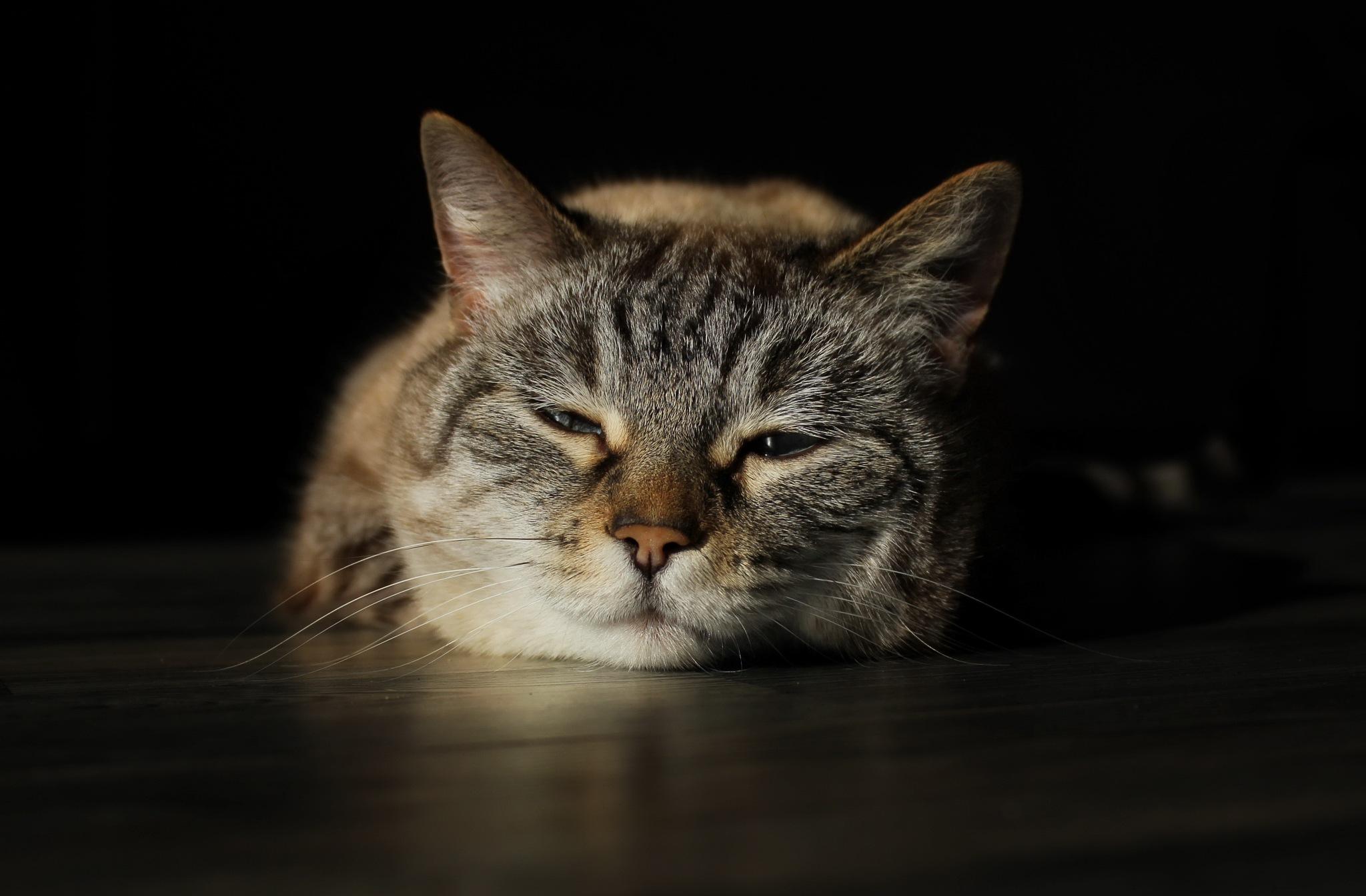 sleepy by Kristijan Siladic