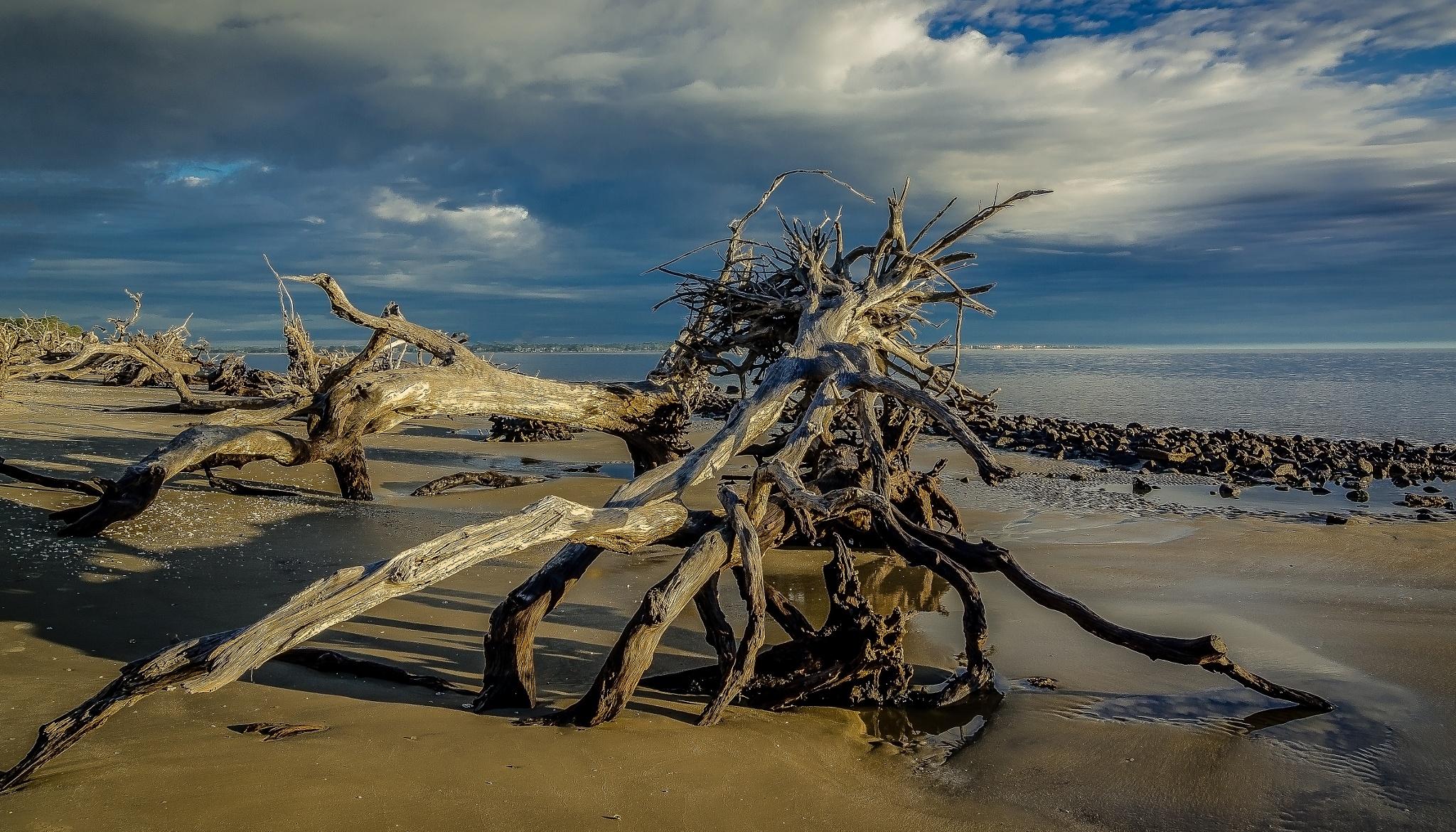 Driftwood Beach by Paul Coleman