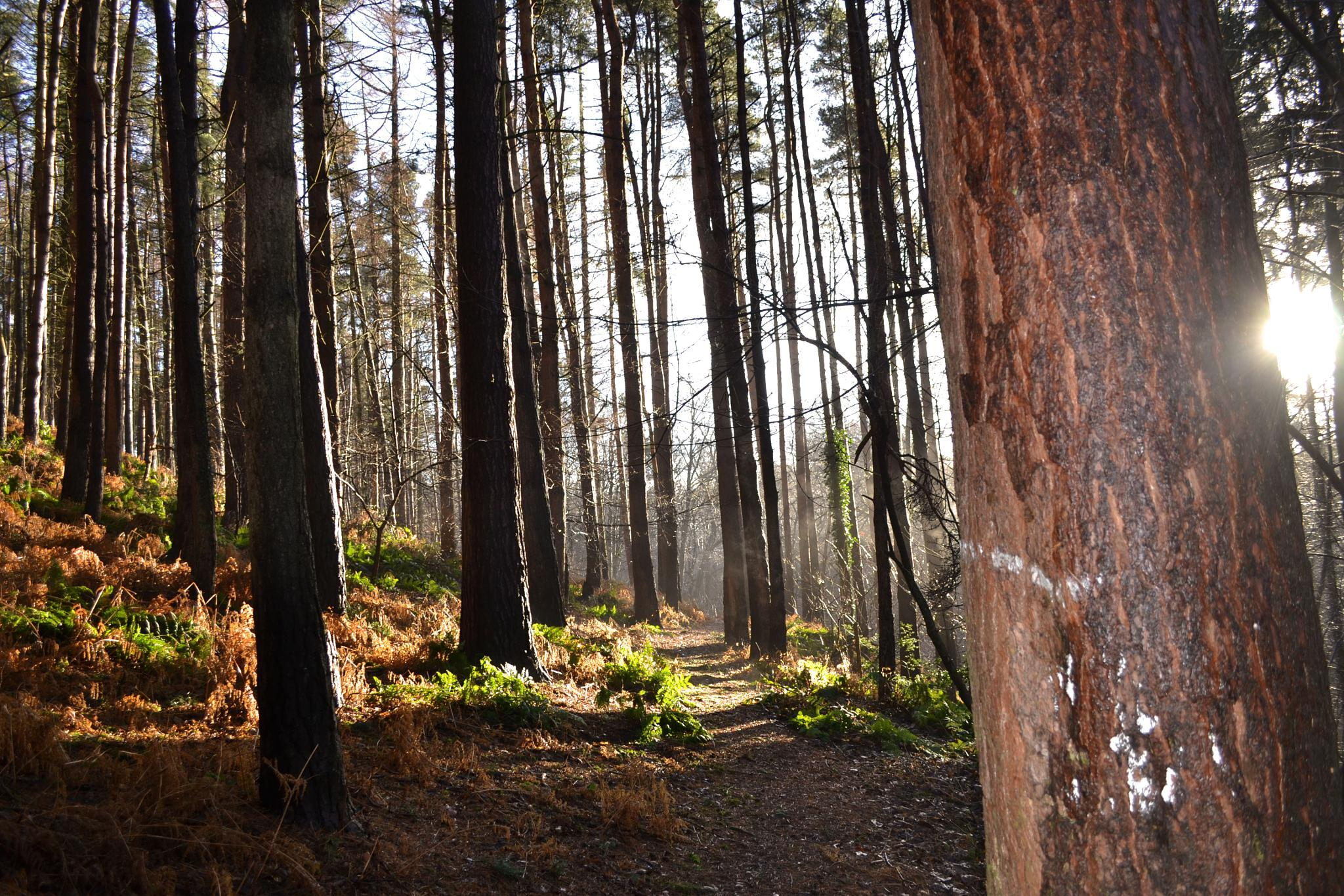 Woodland by AlexMckerracher