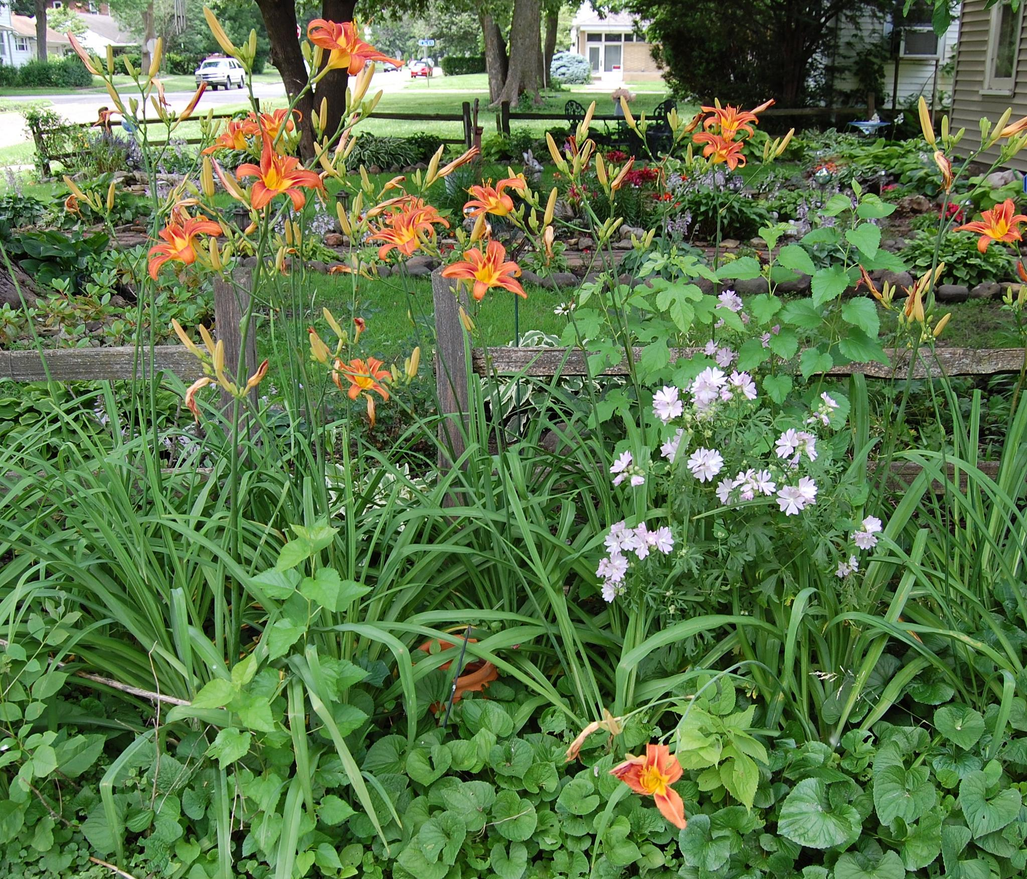 Old fashion Orange Daylily  and Light Pink Mallow patch by opalibra1010