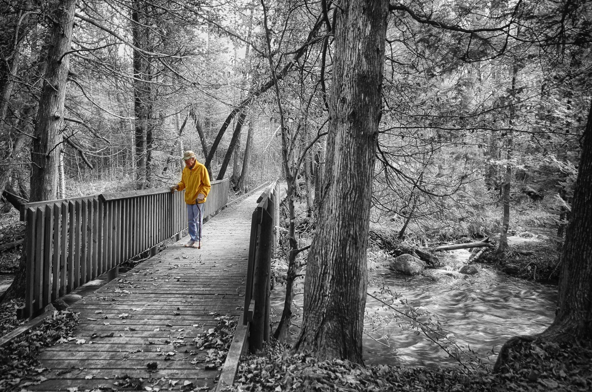 Photo in Nature #rapid river #autumn #michigan