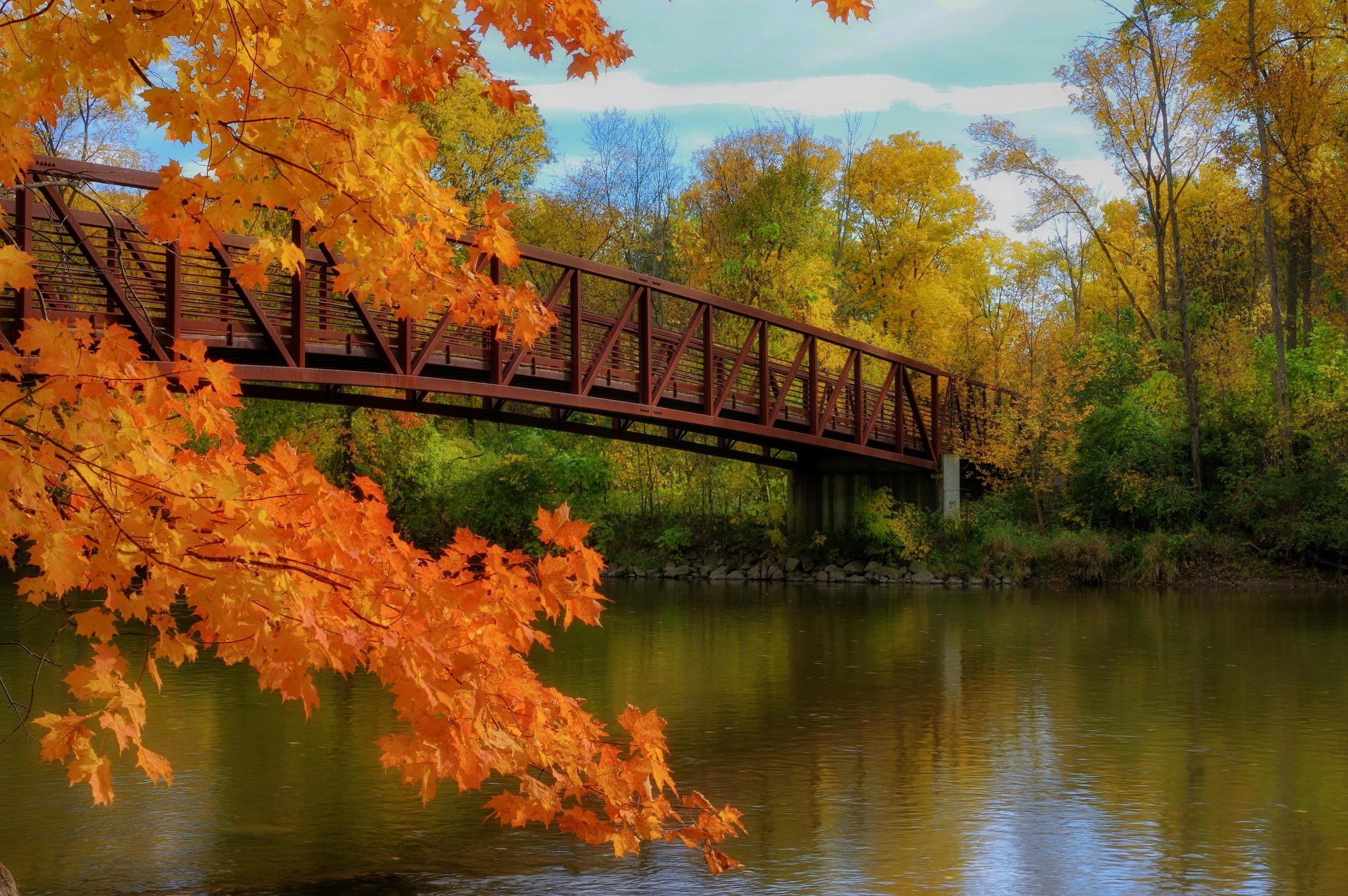 Autumn along the River by Gary O'Boyle