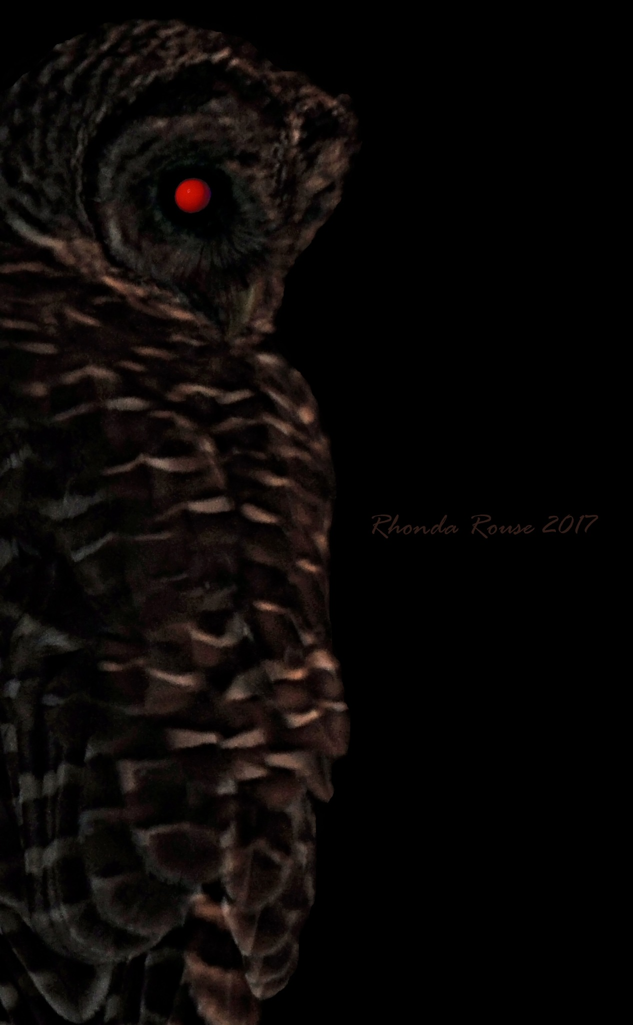 Terminator's Owl by Rhonda A Rouse