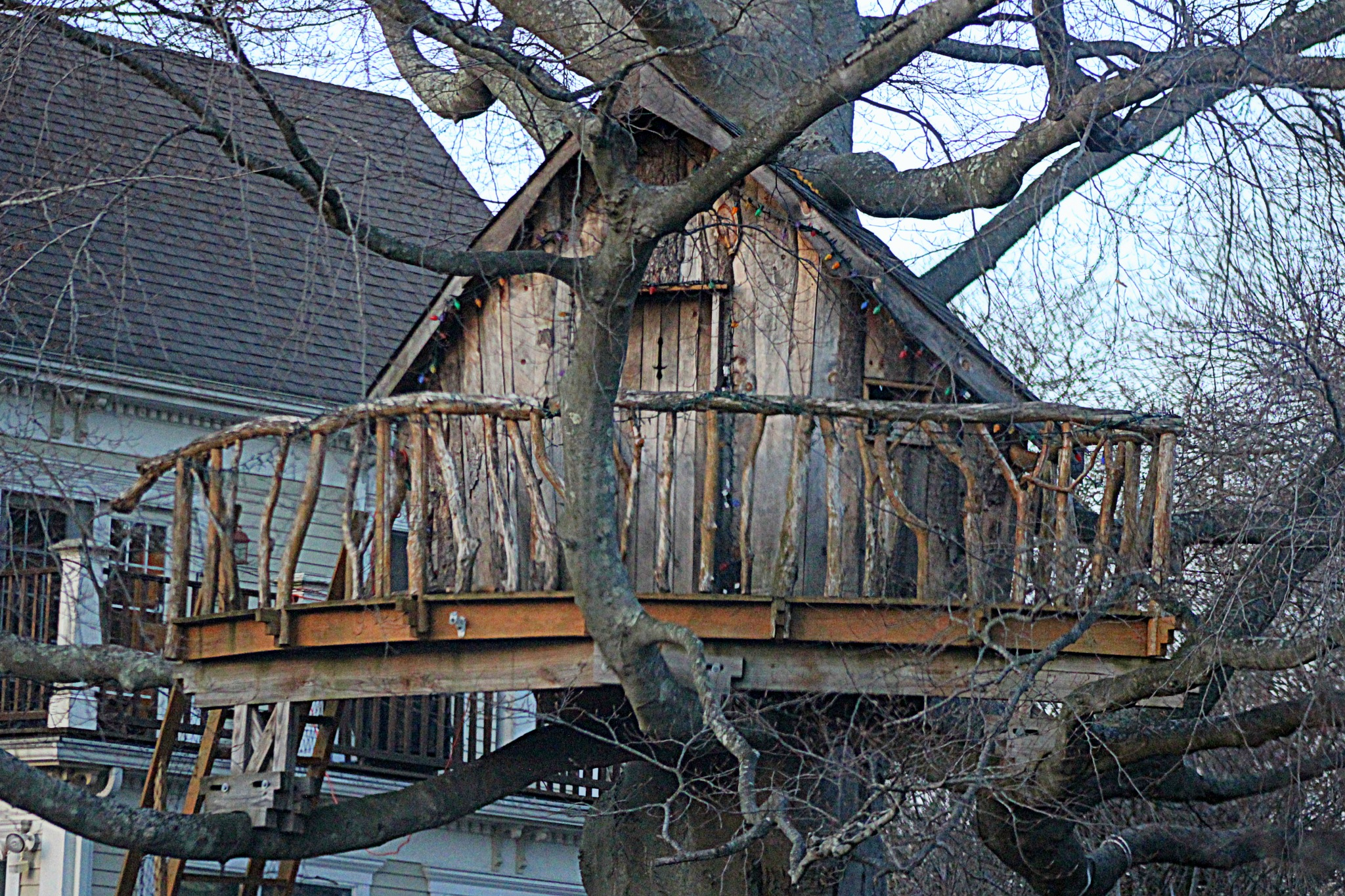 Tree House by susanne carlton