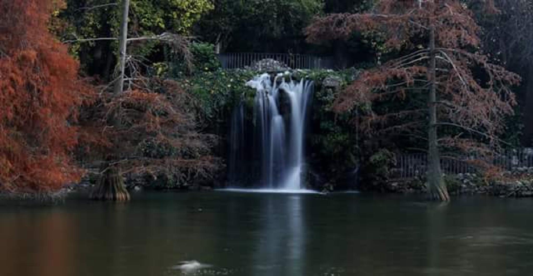 retiro park, madrid by thierrylorenzo