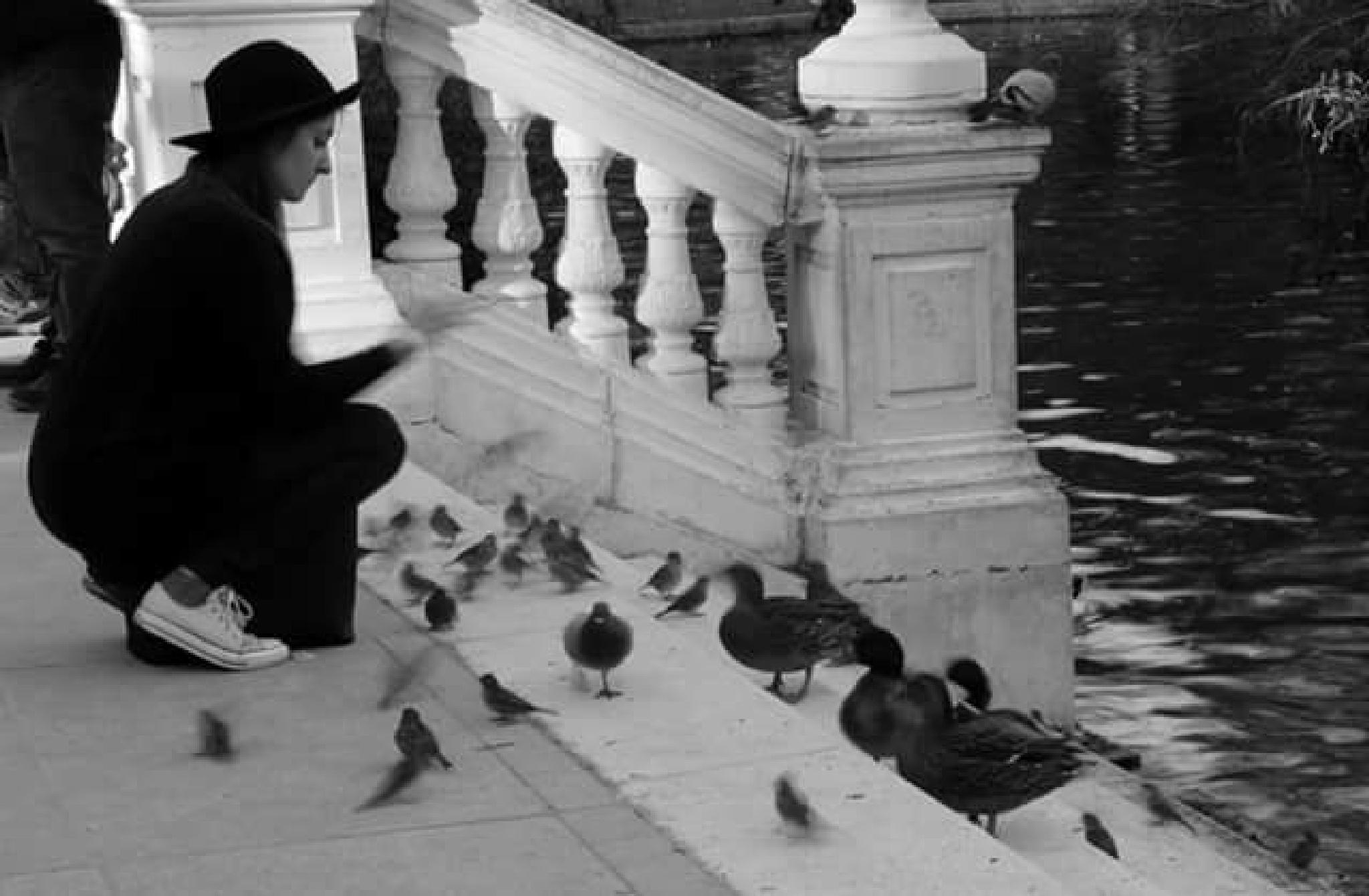 feeding the birds by thierrylorenzo
