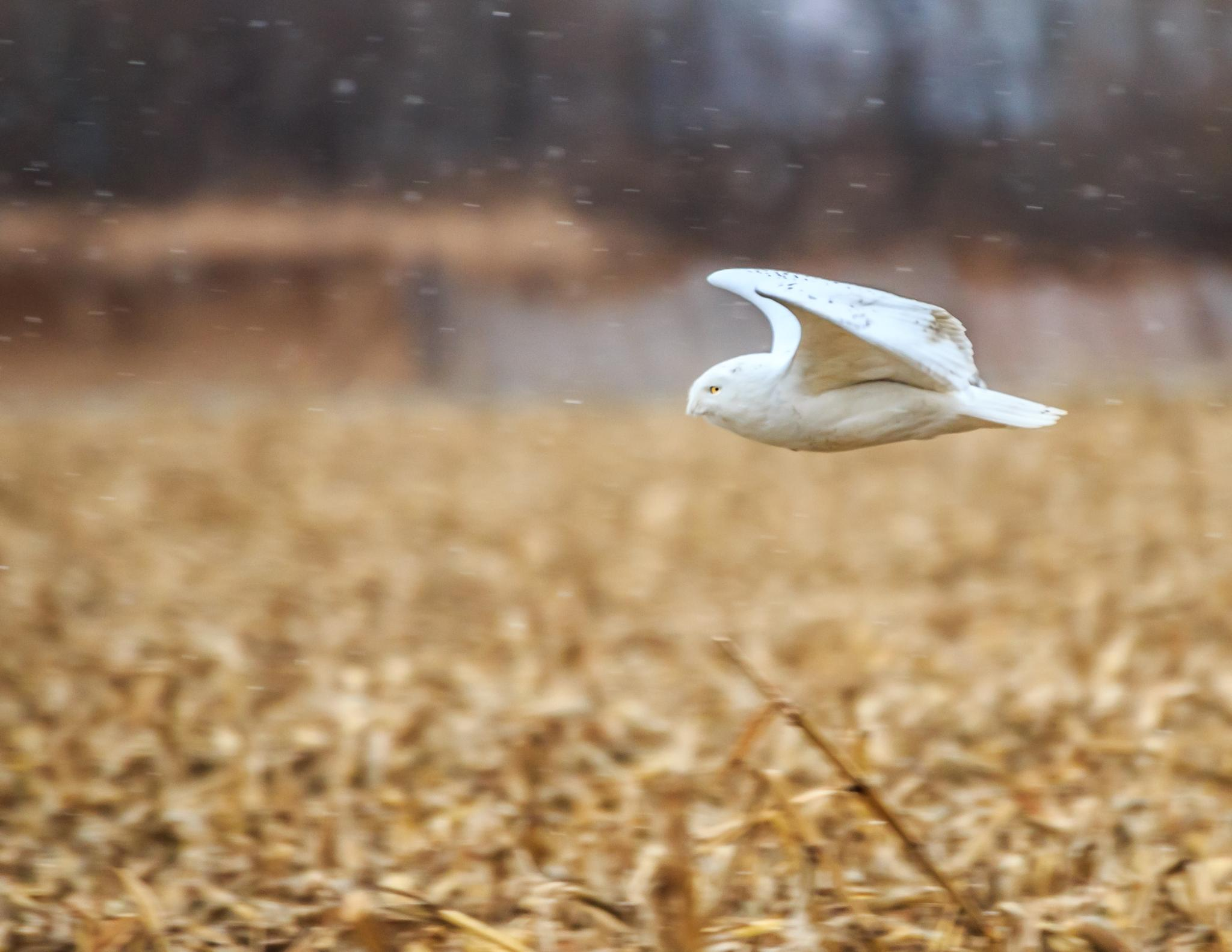 SnowFlight by Duentsch Photo Connect