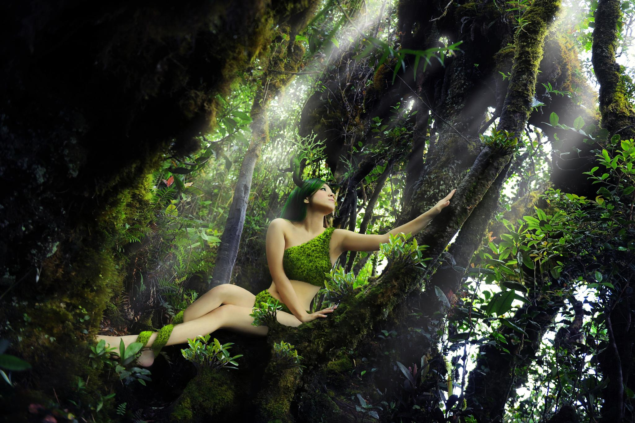 SPIRIT OF THE FOREST by SAM LIM