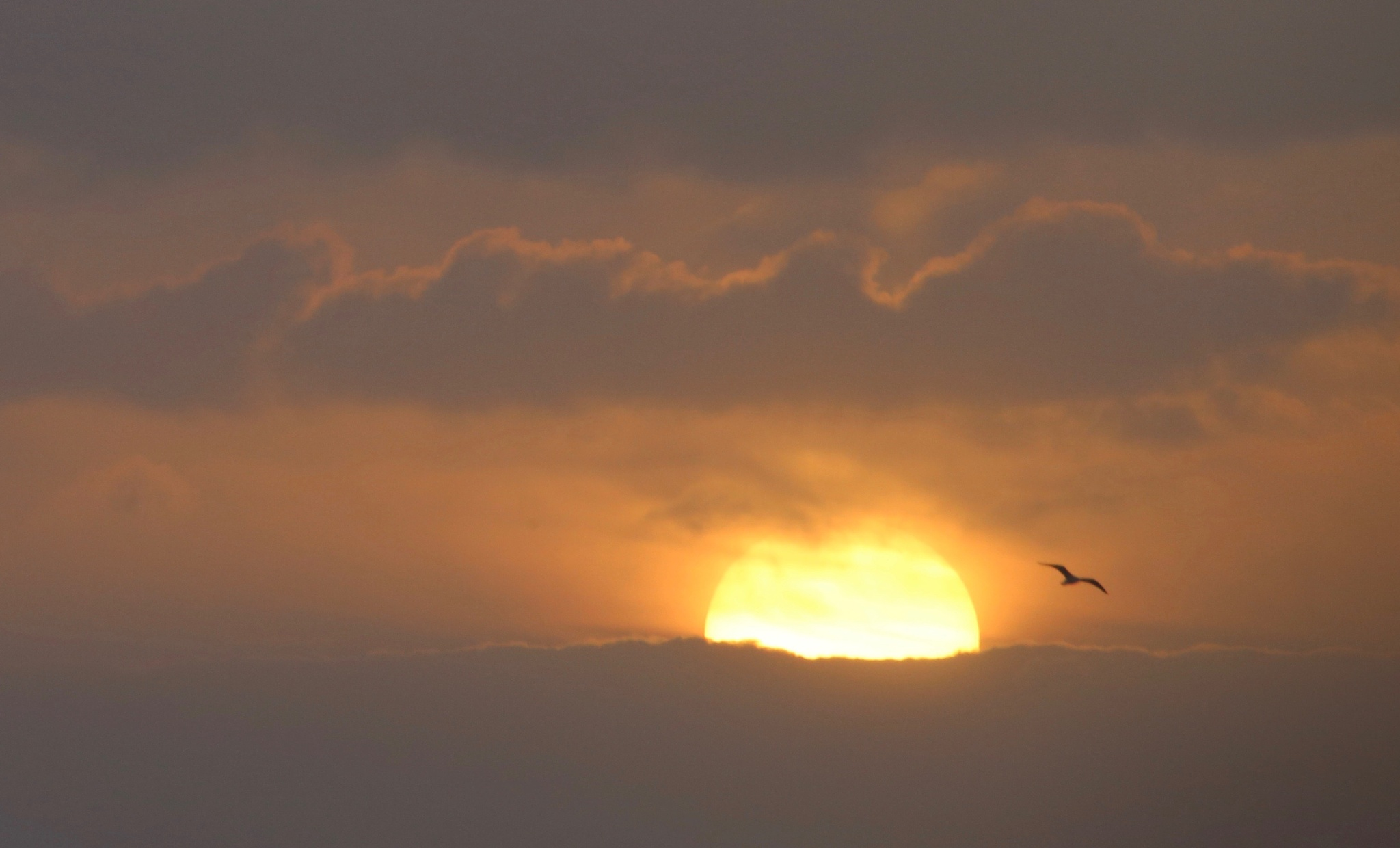 sunrise with a gull by jean marie rohou