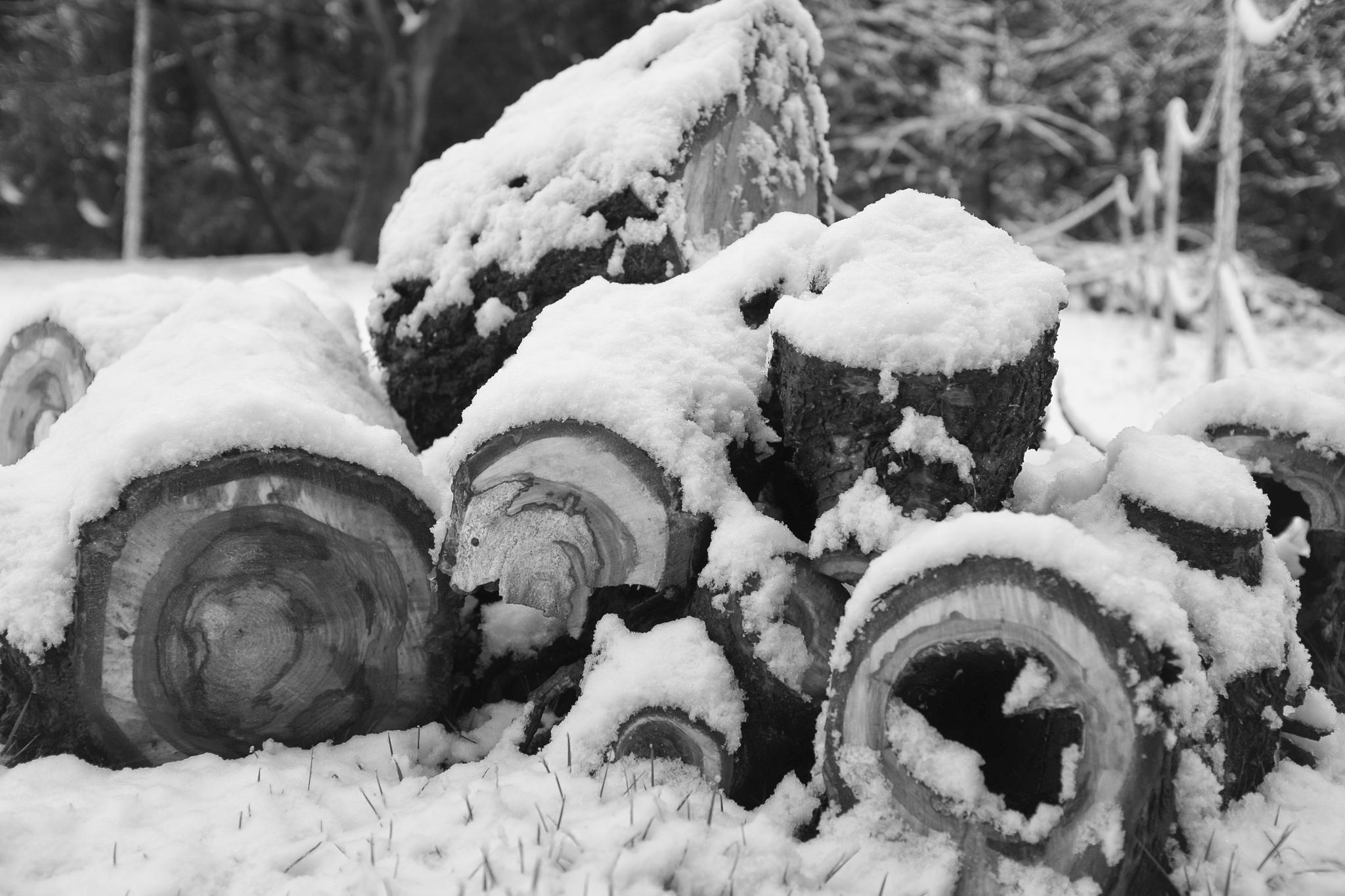 Logs in the Snow by Martin Beecroft