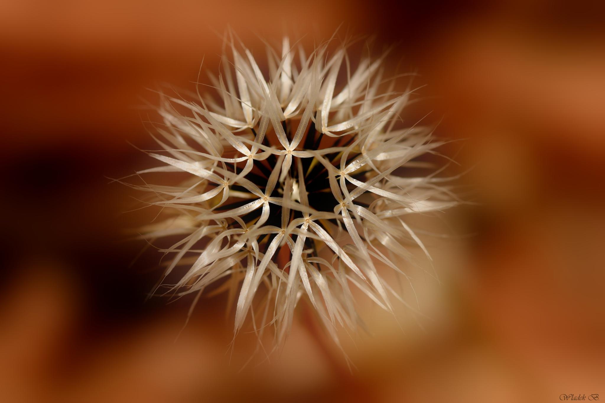 Desert Flower by Wladek