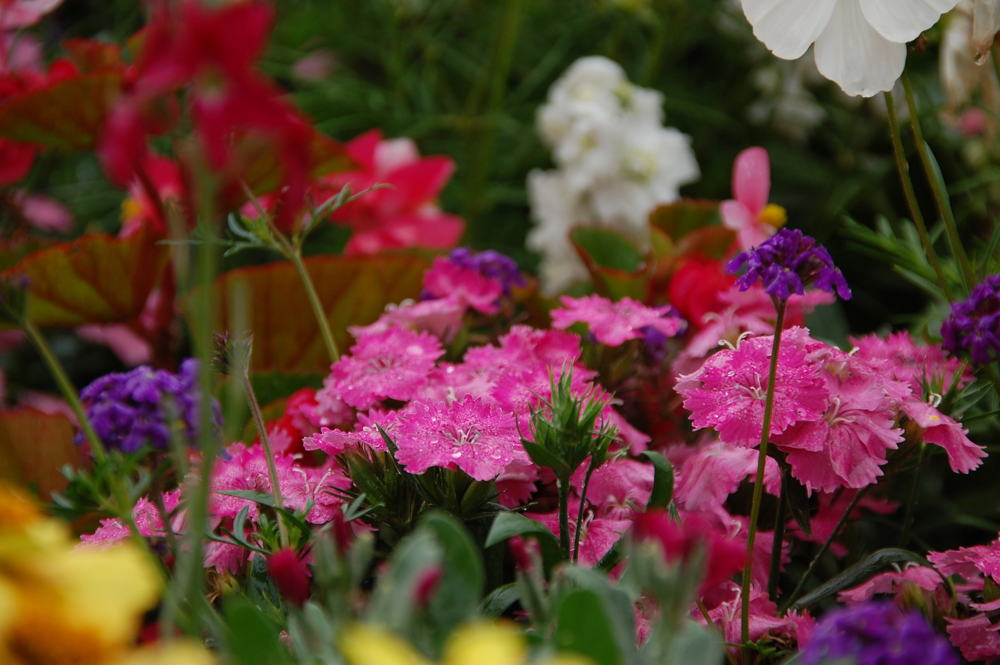 Flowers of Paris by Photoelch