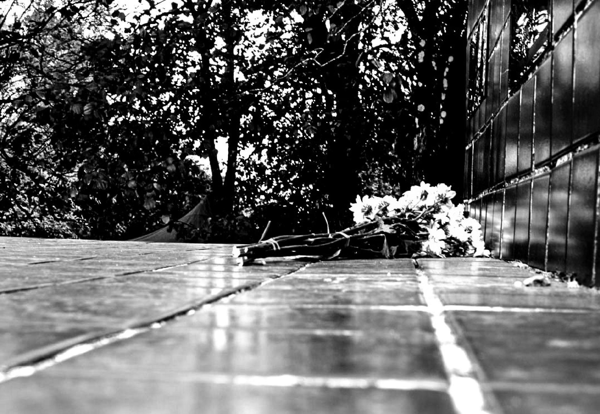 """""""É agora o jardim / Onde todo o amor acaba (...)"""" by Francisco Milhorança"""