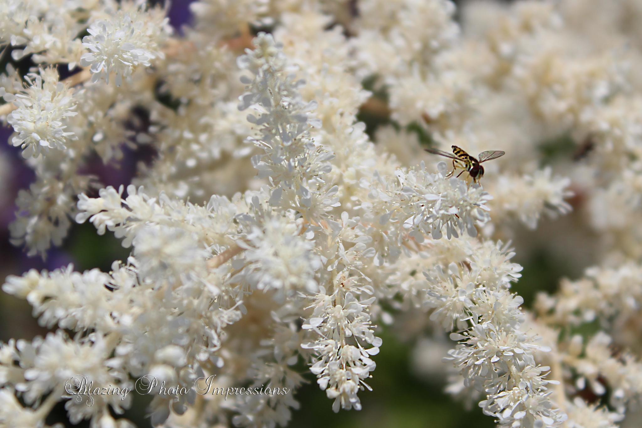 Bee Quiet by Nanehi Moon