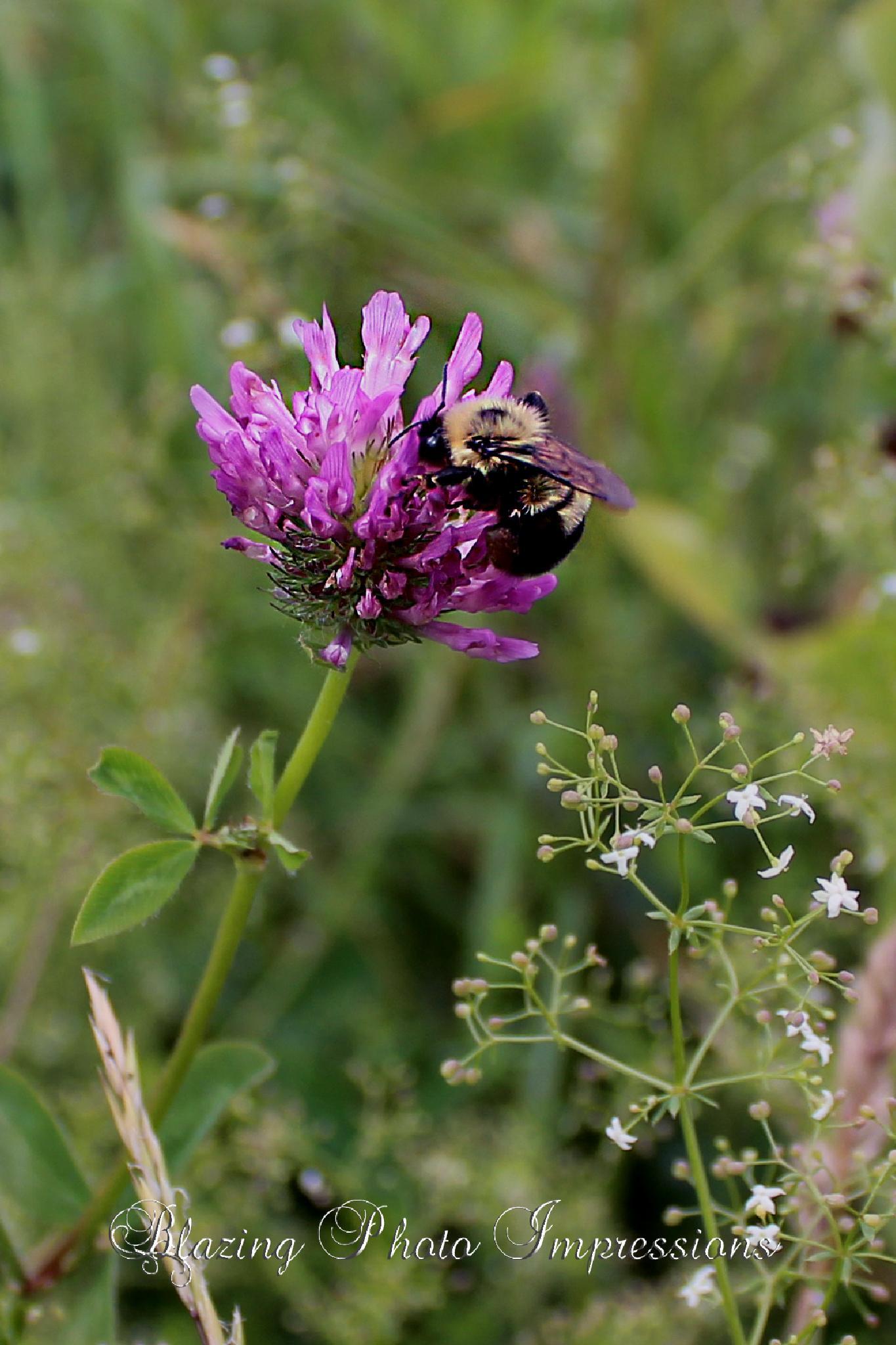 Bumble Bee Bliss by Nanehi Moon