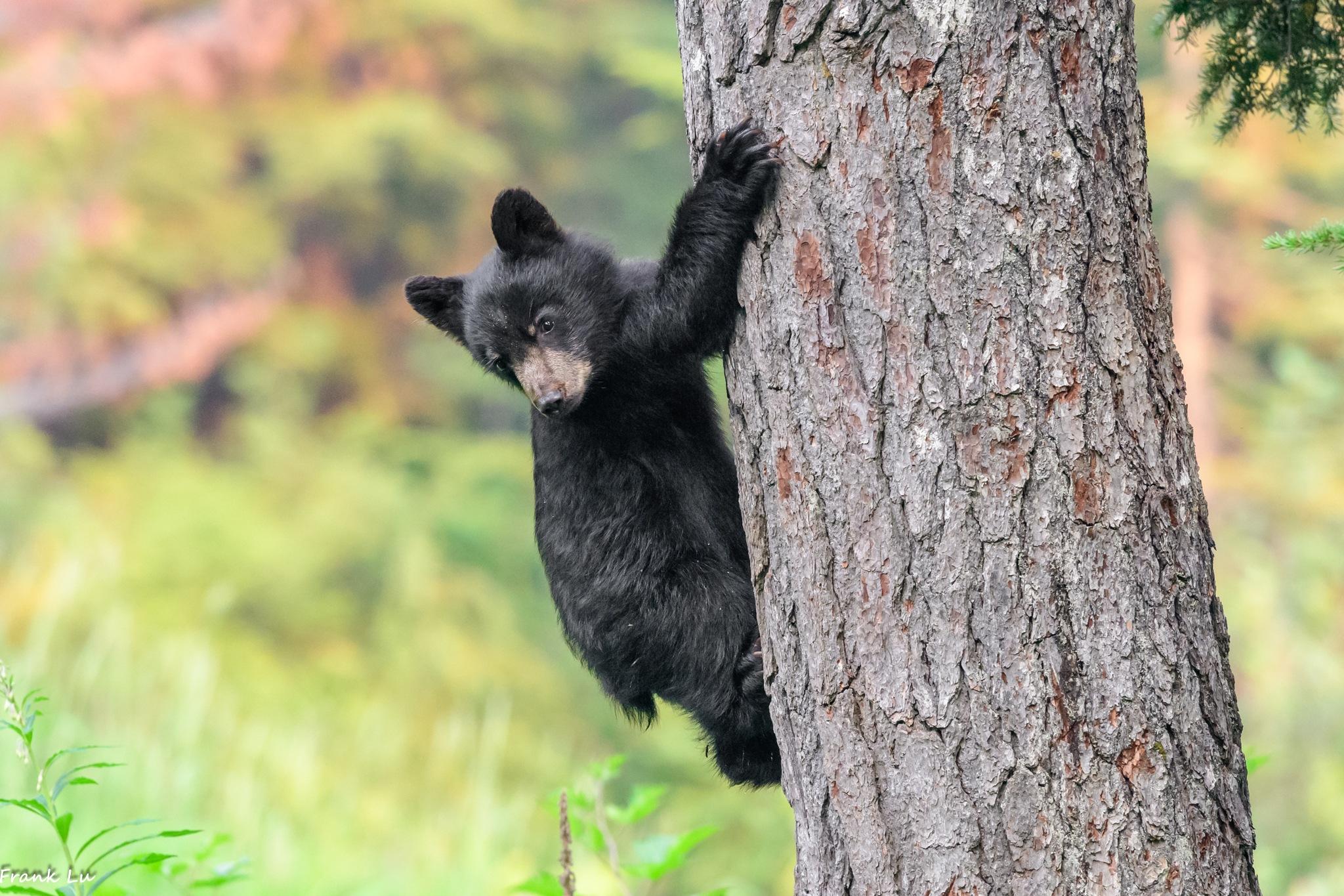 The tree climber by Janmilu