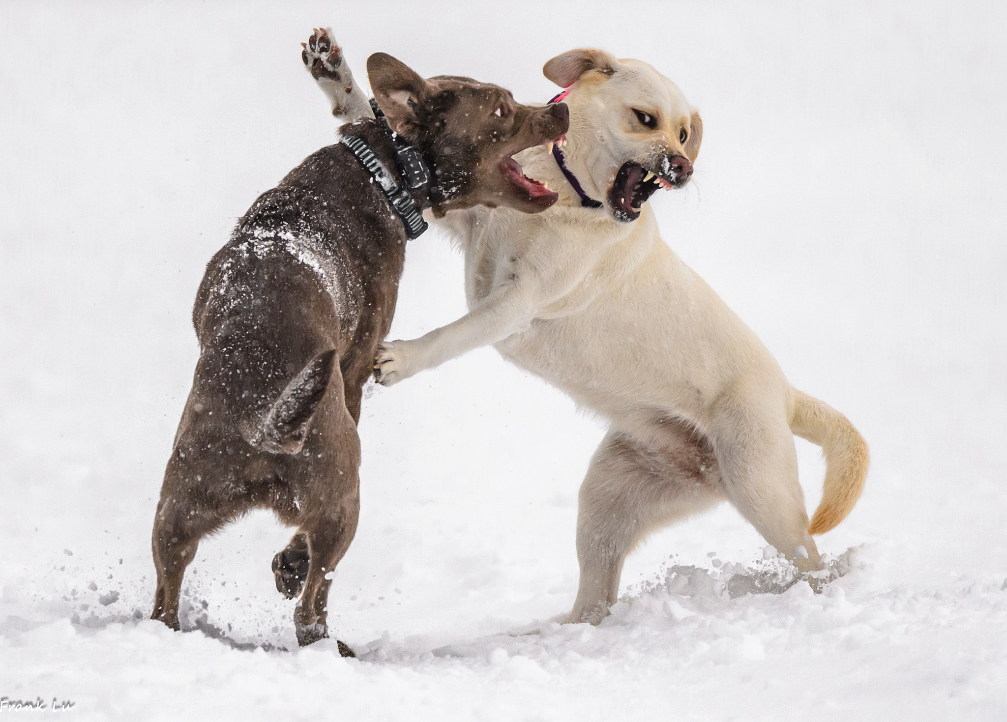 Play fighting  by Janmilu