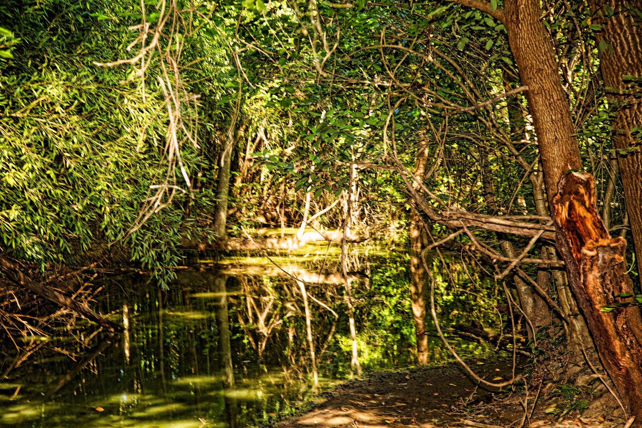 The Bog Garden by dewoodward