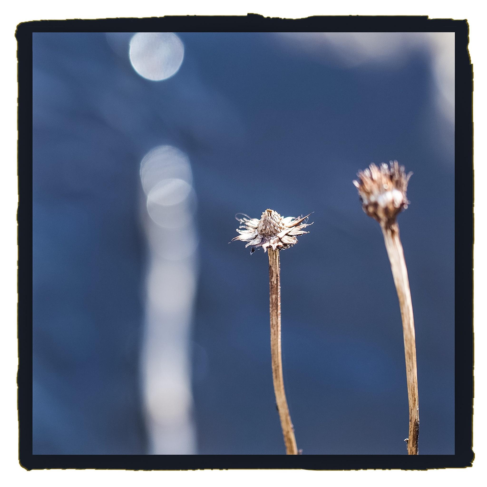 Untitled by miedeschepper