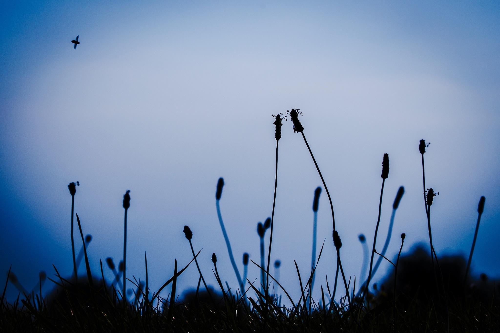 Dream by miedeschepper
