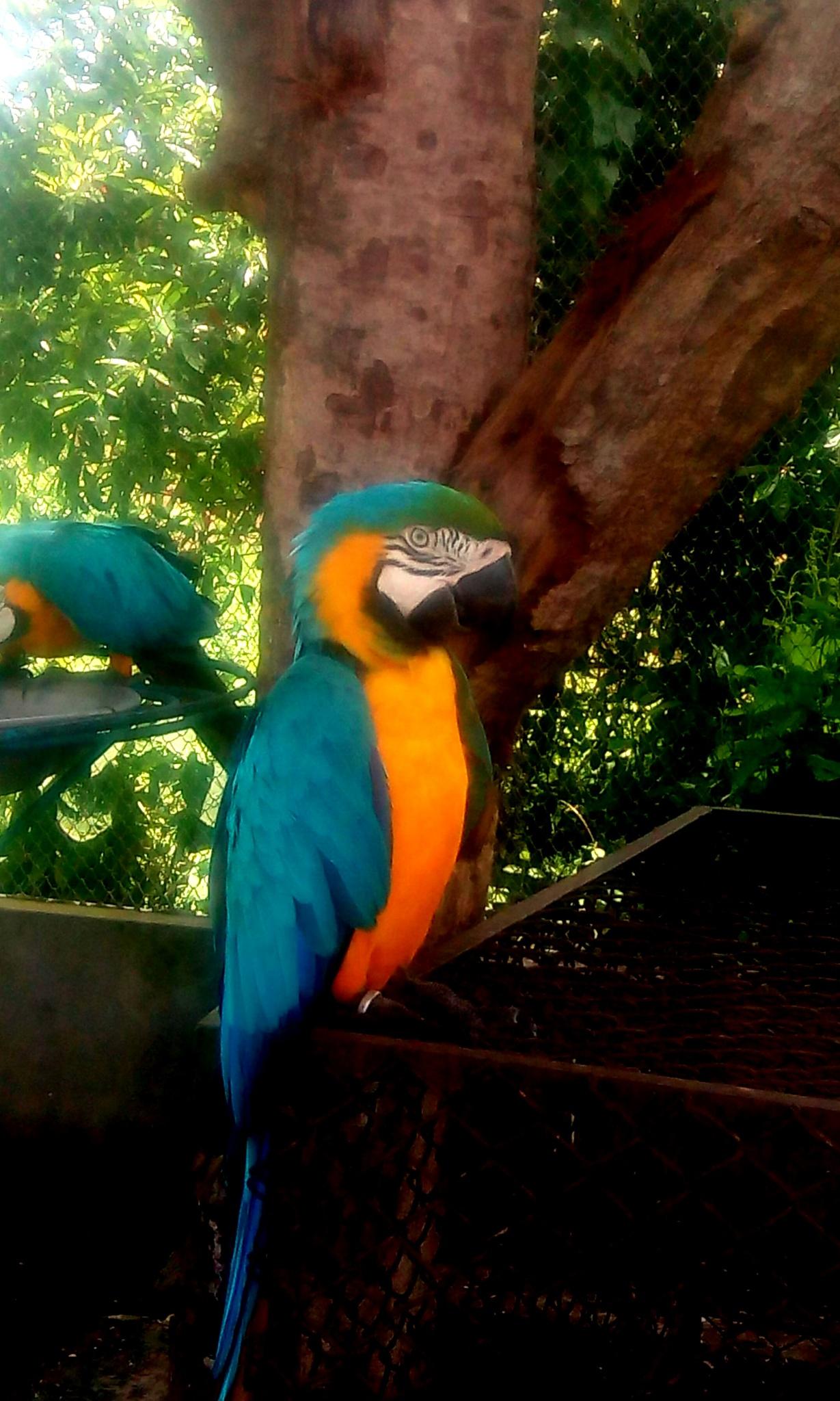the birds of paradise by John Quazi