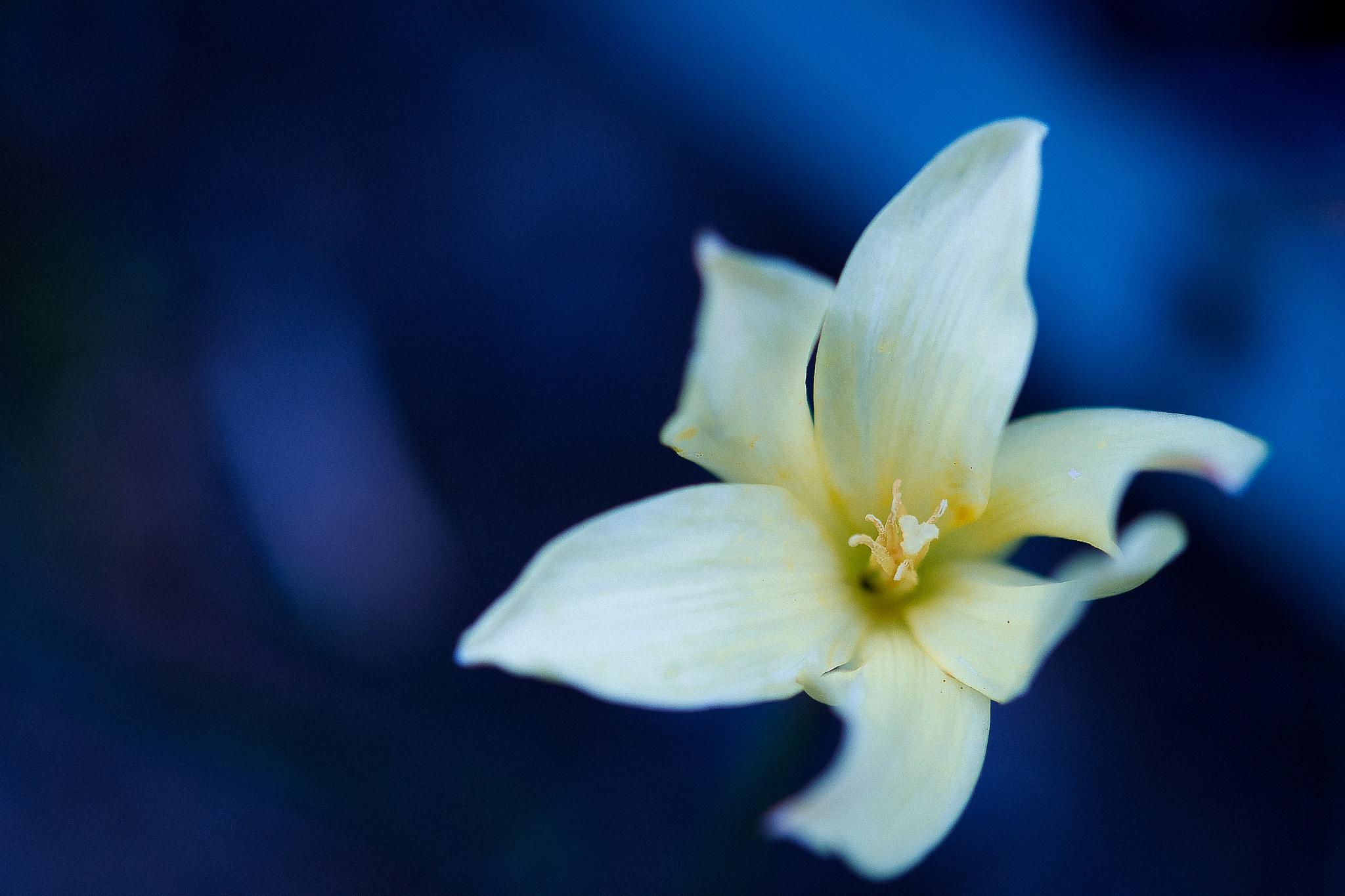 白い花 1 by hirosi484