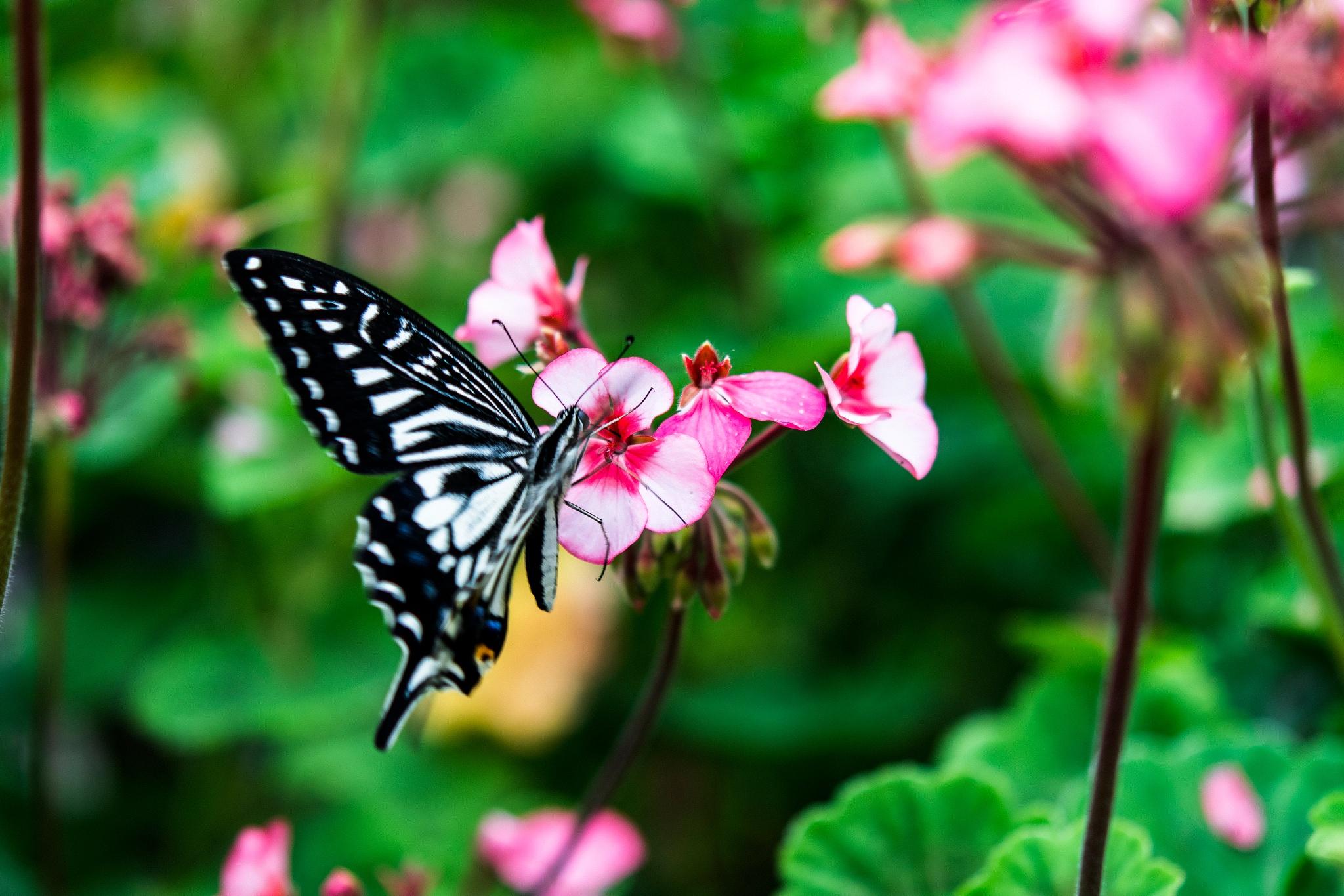 花と蝶 by Hiroshi Miyashita