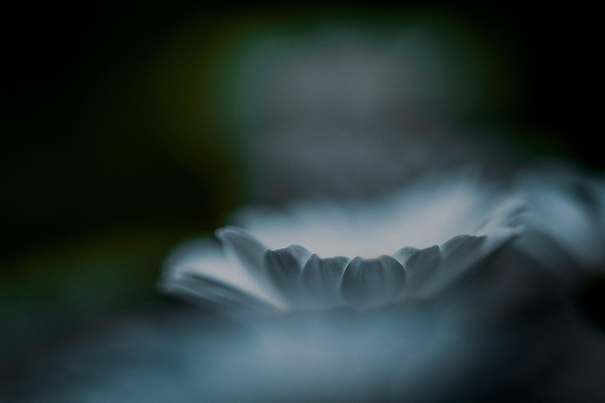 白の花びら 1 by Hiroshi Miyashita