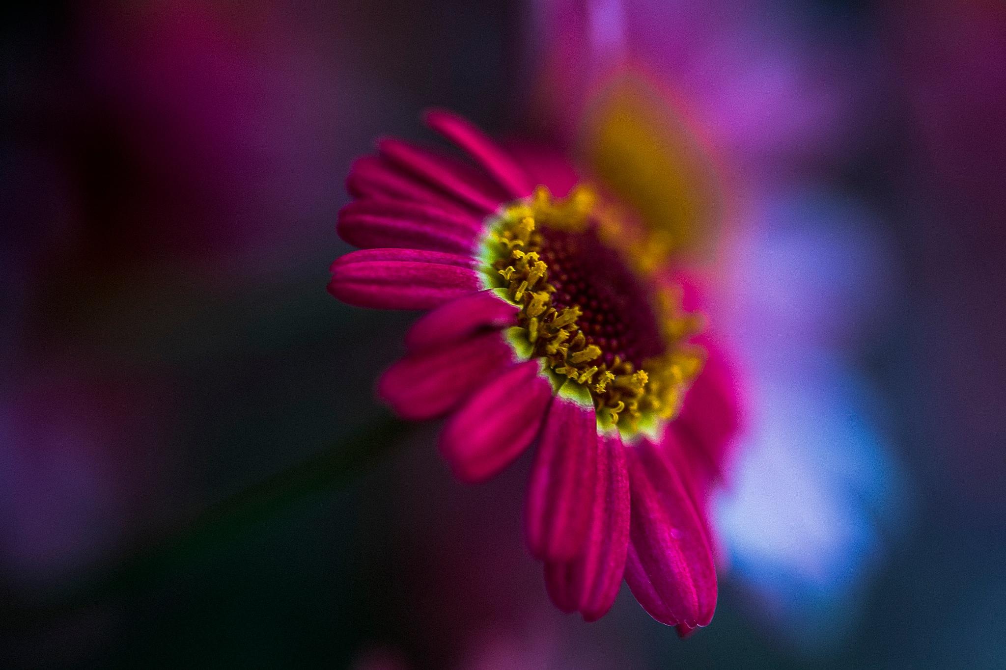 赤い花 A by hirosi484