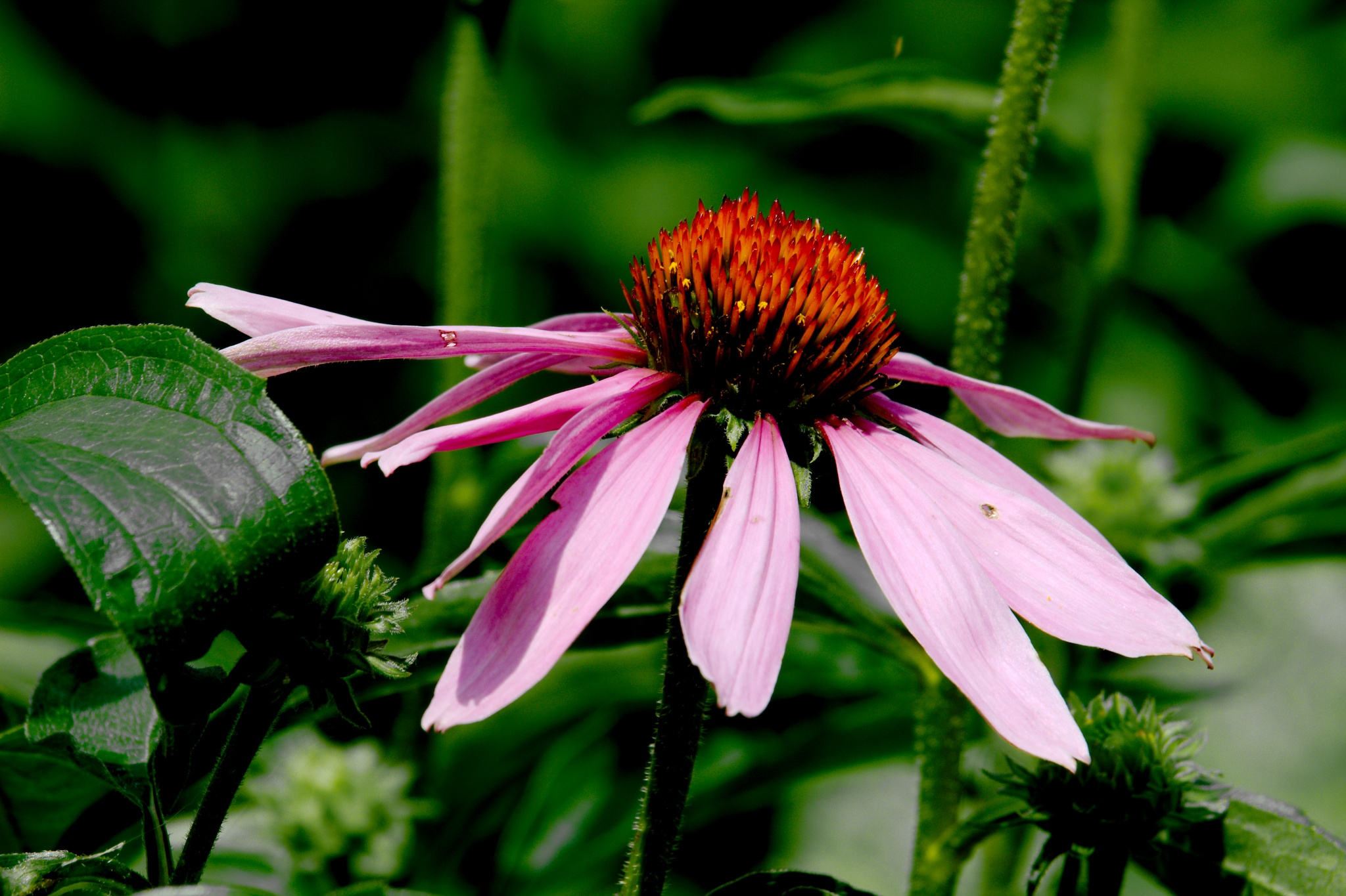 City Park Flower (Macro) by Presnell Photography