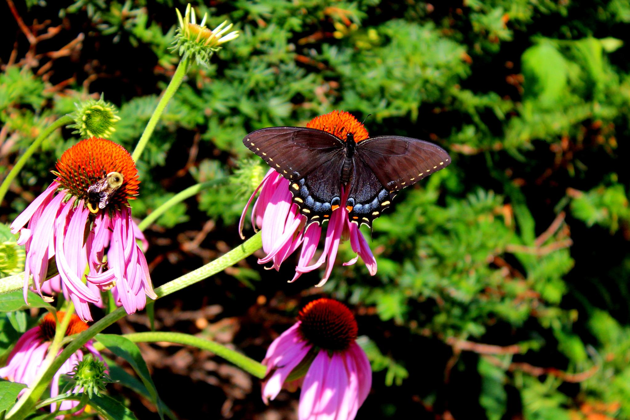 Butterfly in Church Flowerbed 2 by Presnell Photography