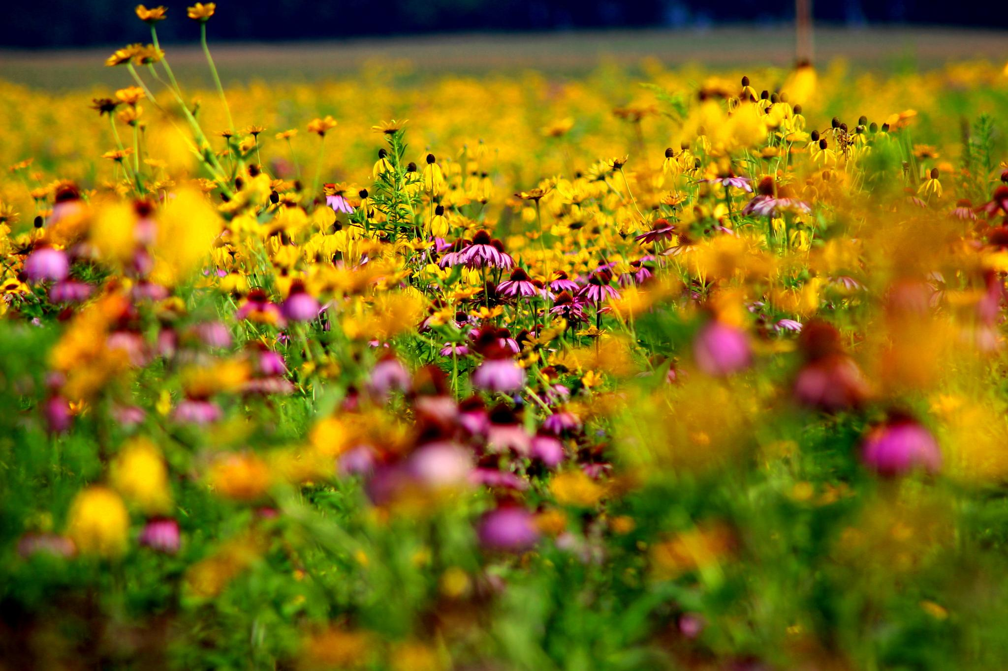 Splash of Color (Marshall Meadow) by Presnell Photography