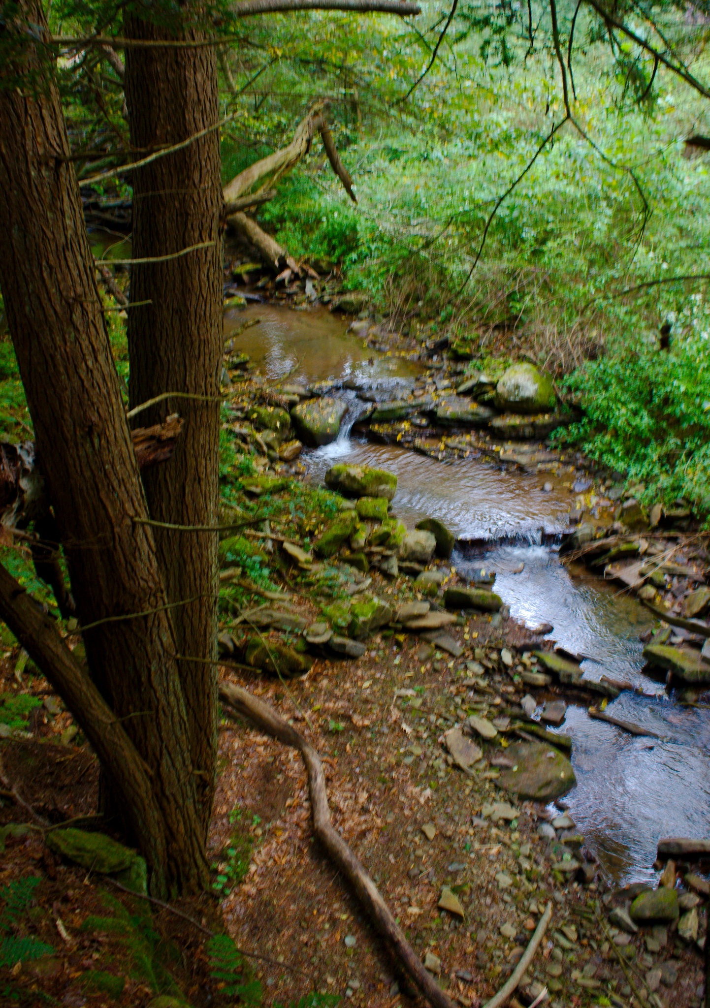 Trees by a Stream by Presnell Photography