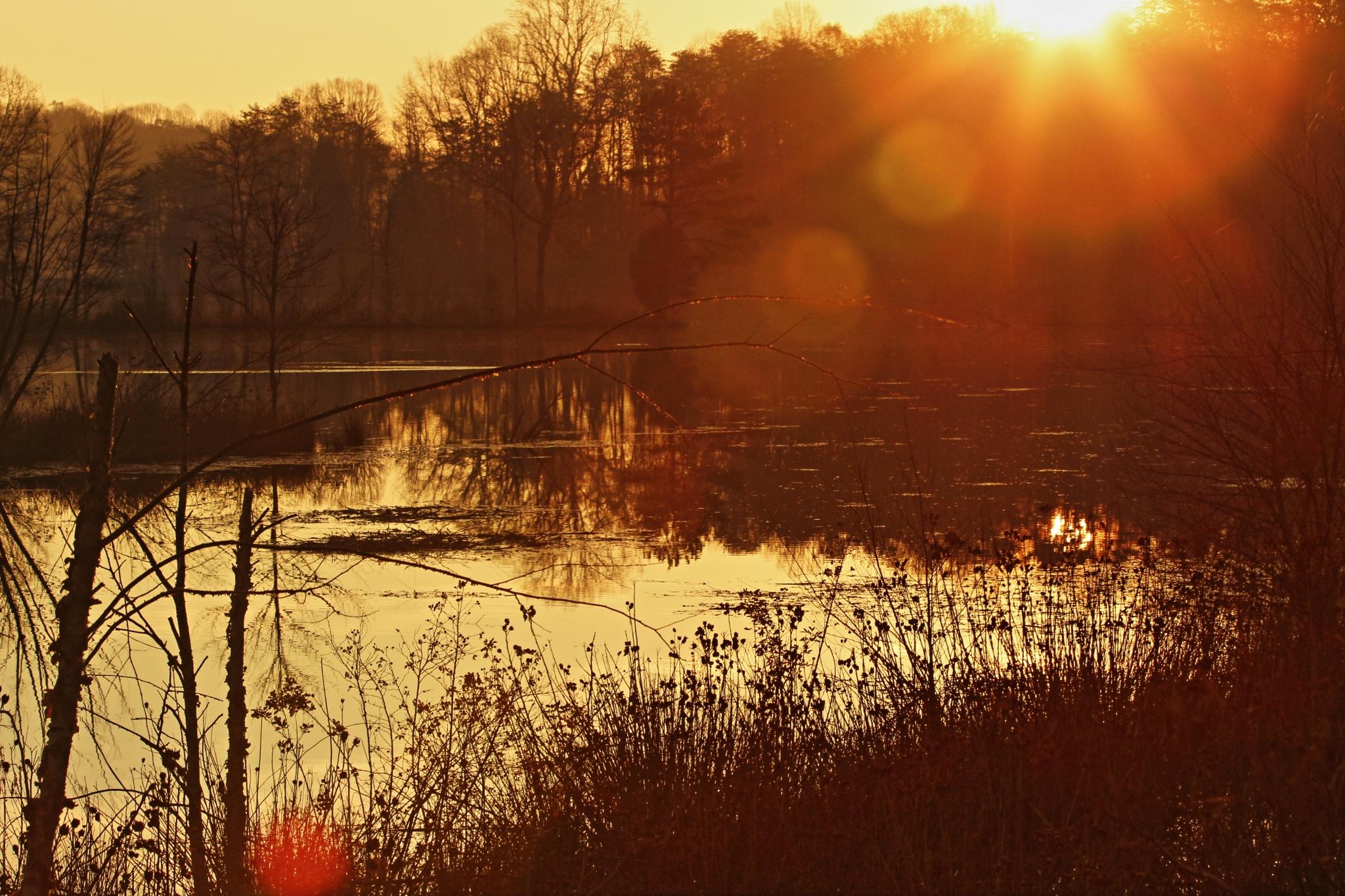 Morning Sunrise by Ronald Woodward
