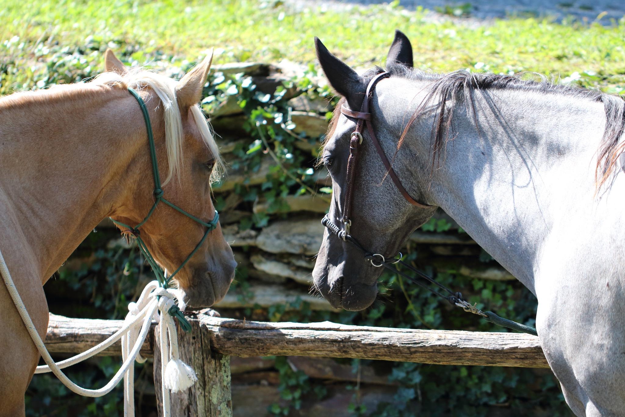 Horse talk by Ronald Woodward
