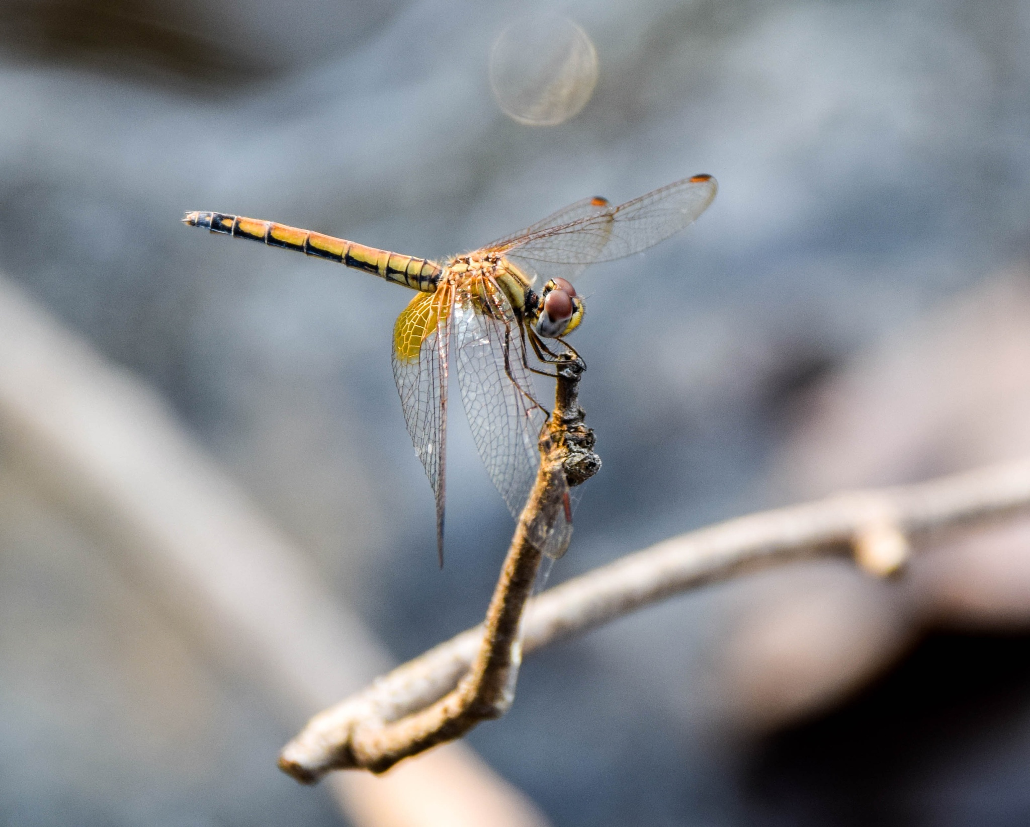 Dragonfly by ananthatejas