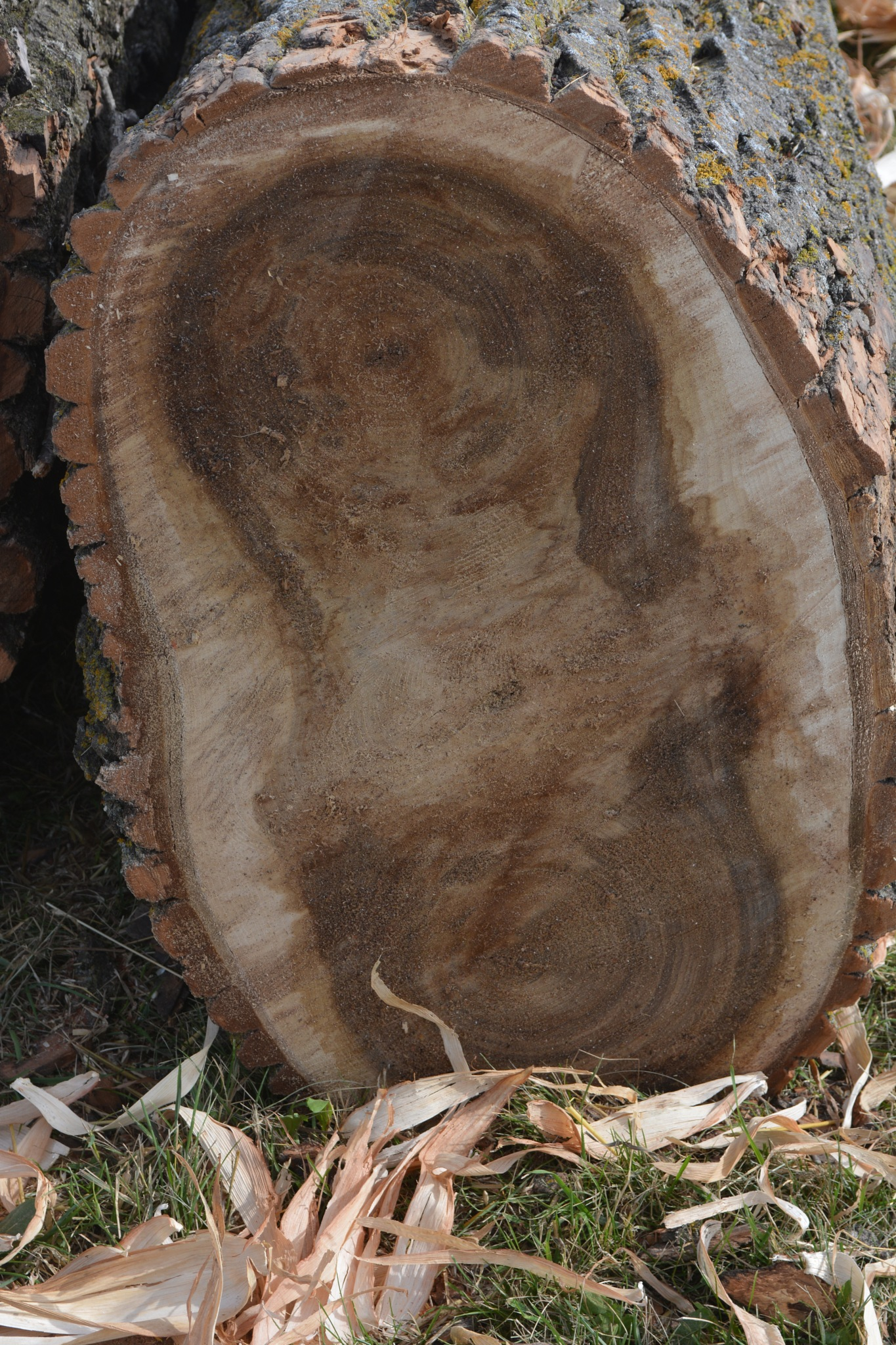 face in a log by KLN