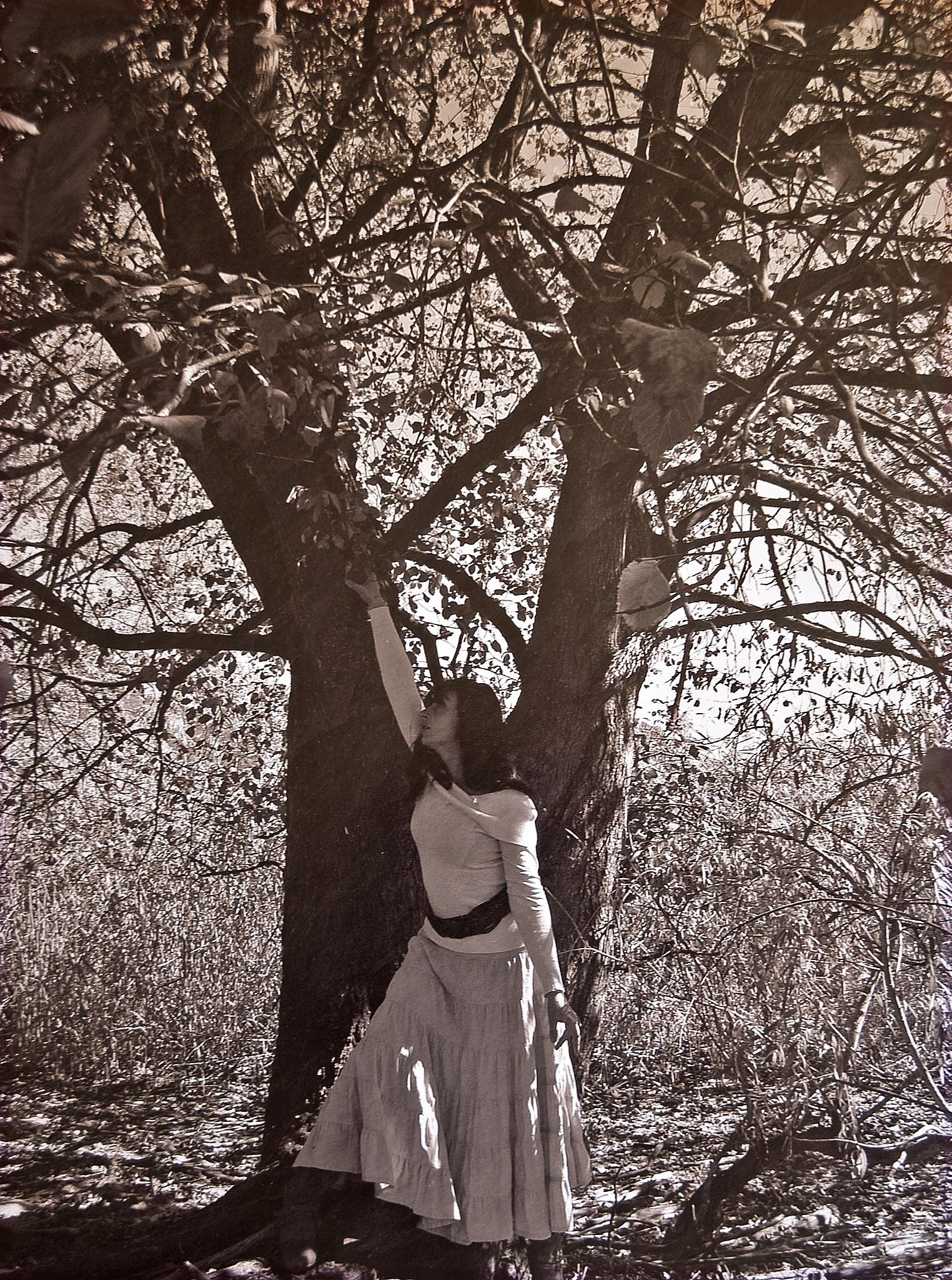 diventare alberi by sergio bonzani