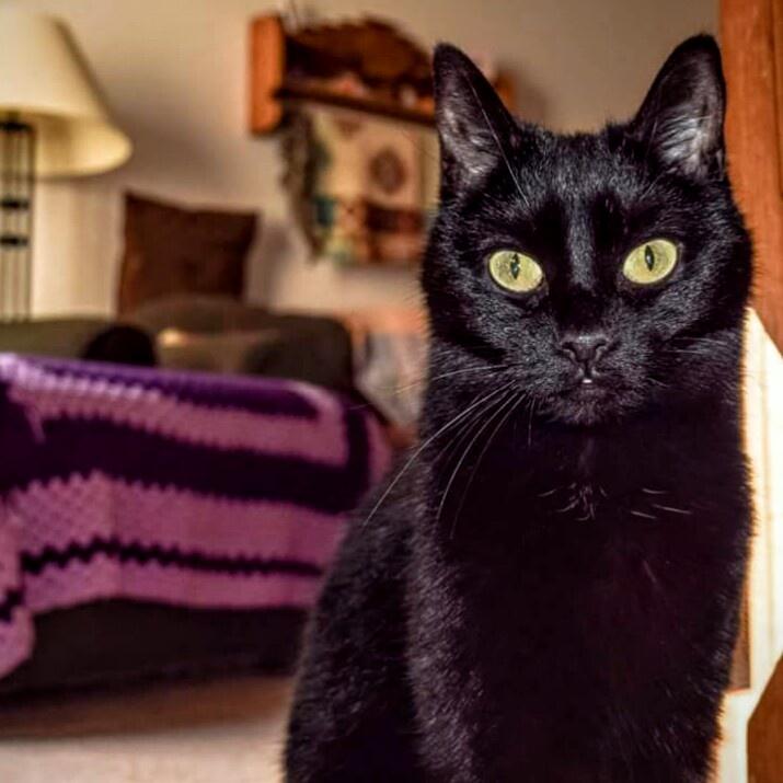 Black Cat  by Tina