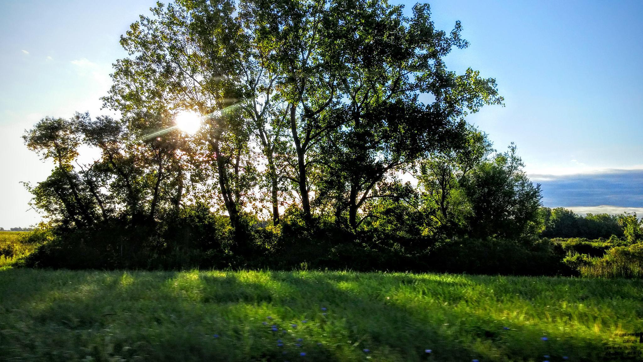 Morning Sunrise  by Tina