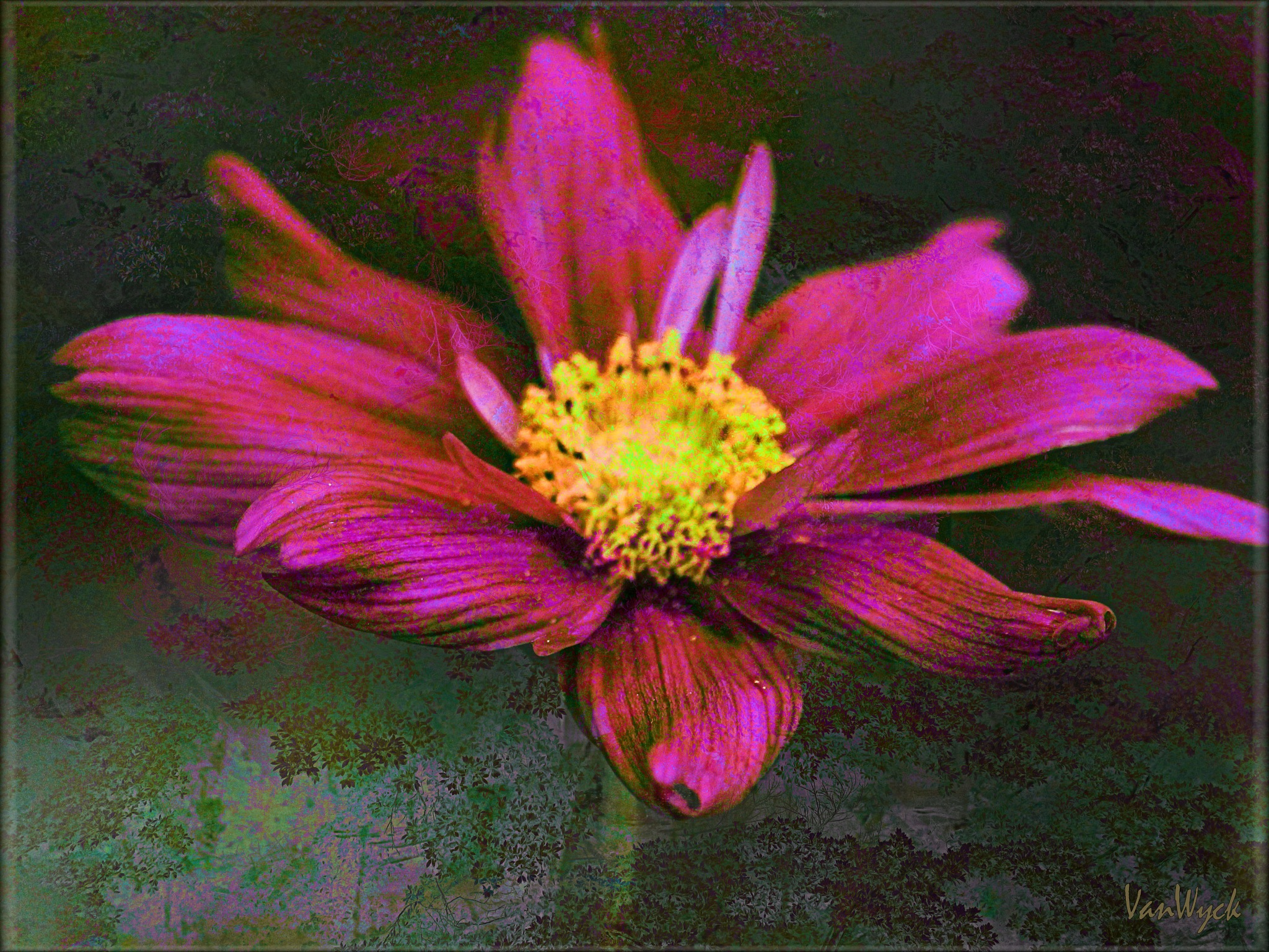 Red Flower on Faded Green by VanWyck