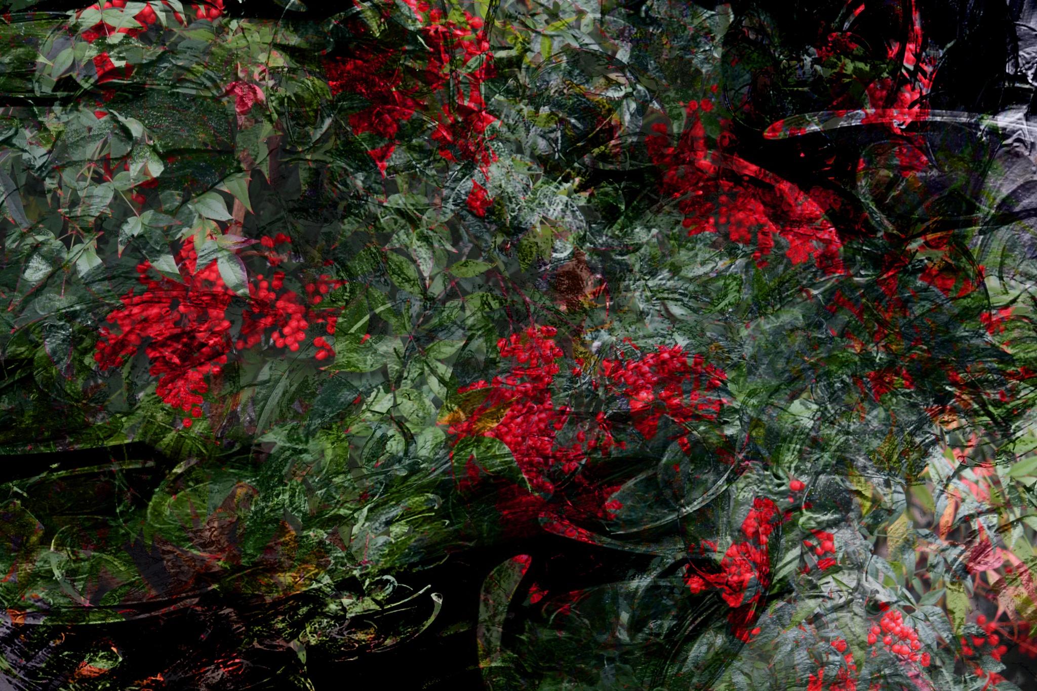 Christmas Berries by VanWyck