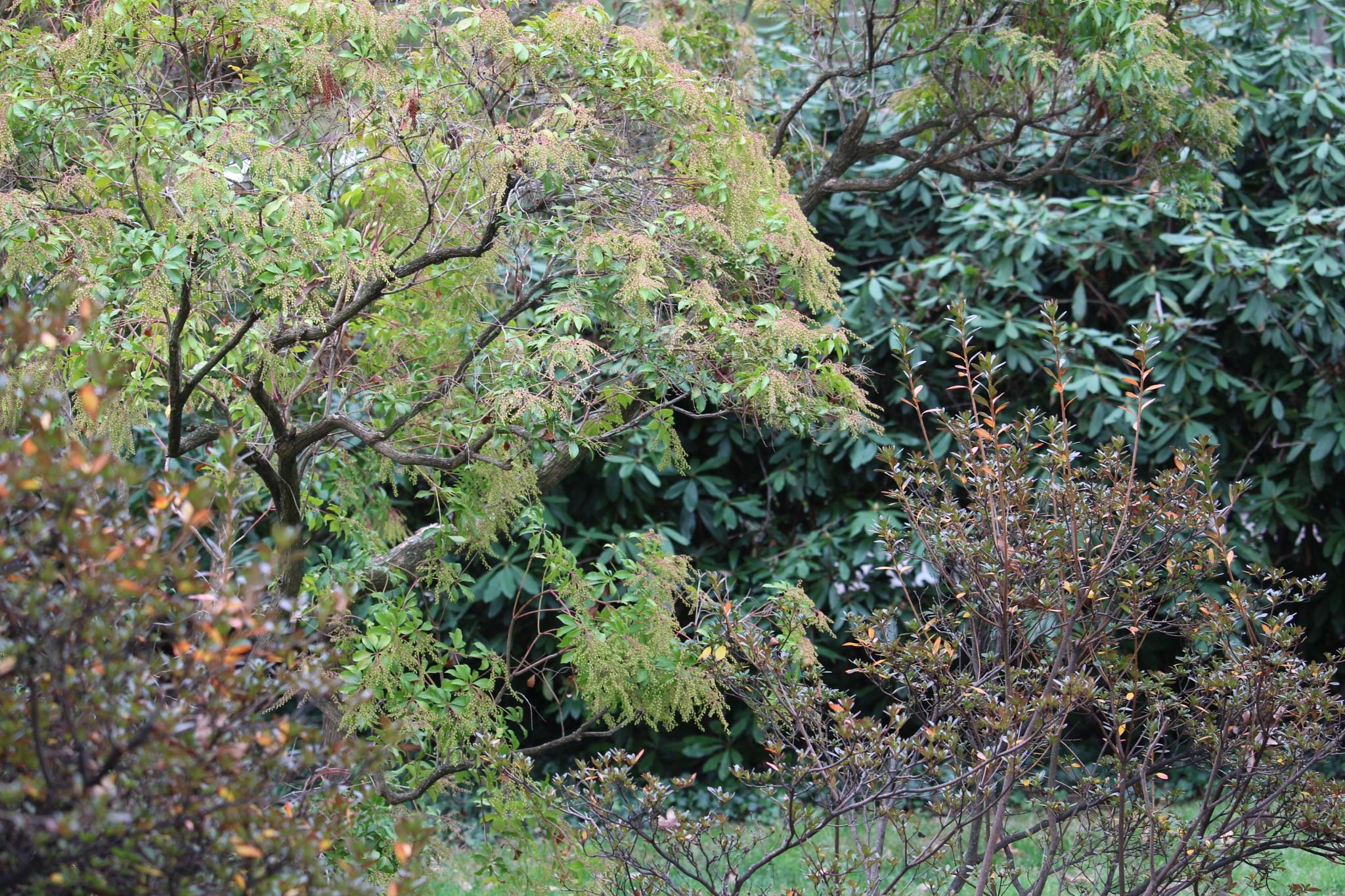 December Greens by VanWyck