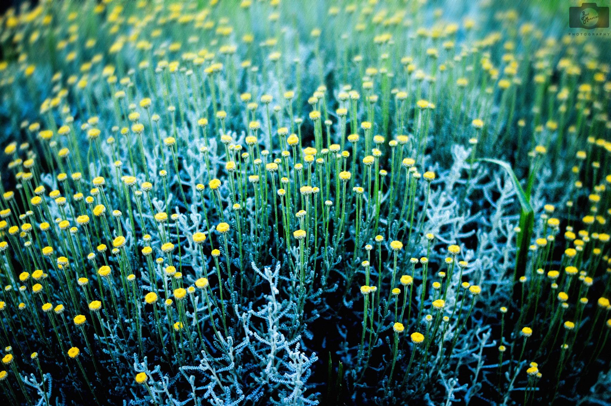 Summer flowers by Best Memories