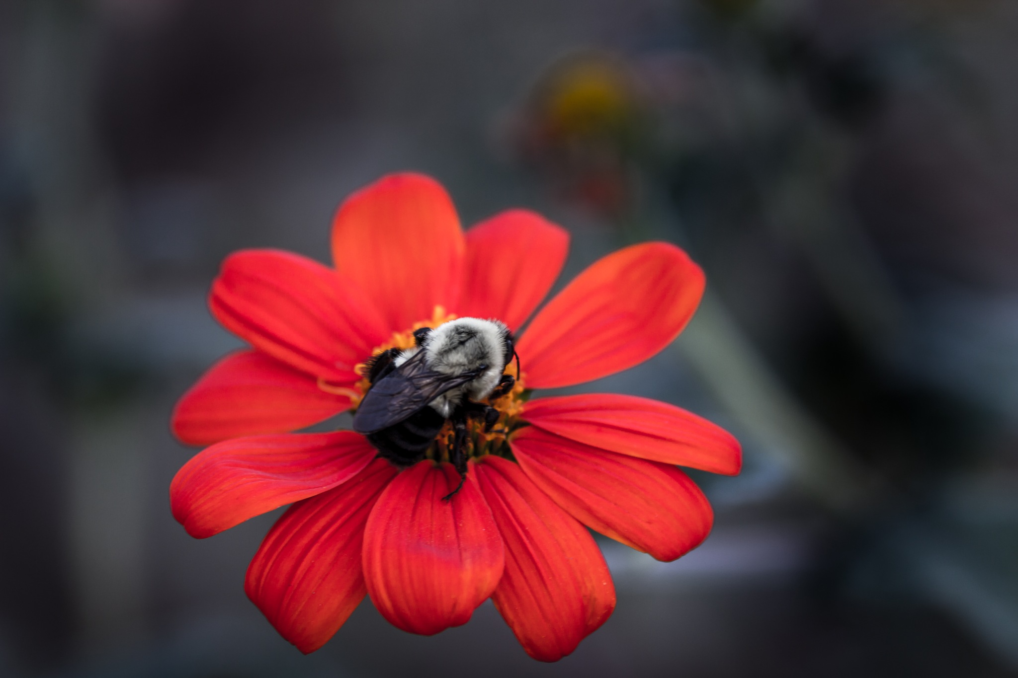 Red Buzzing Flower by MF - SyracuseLUX