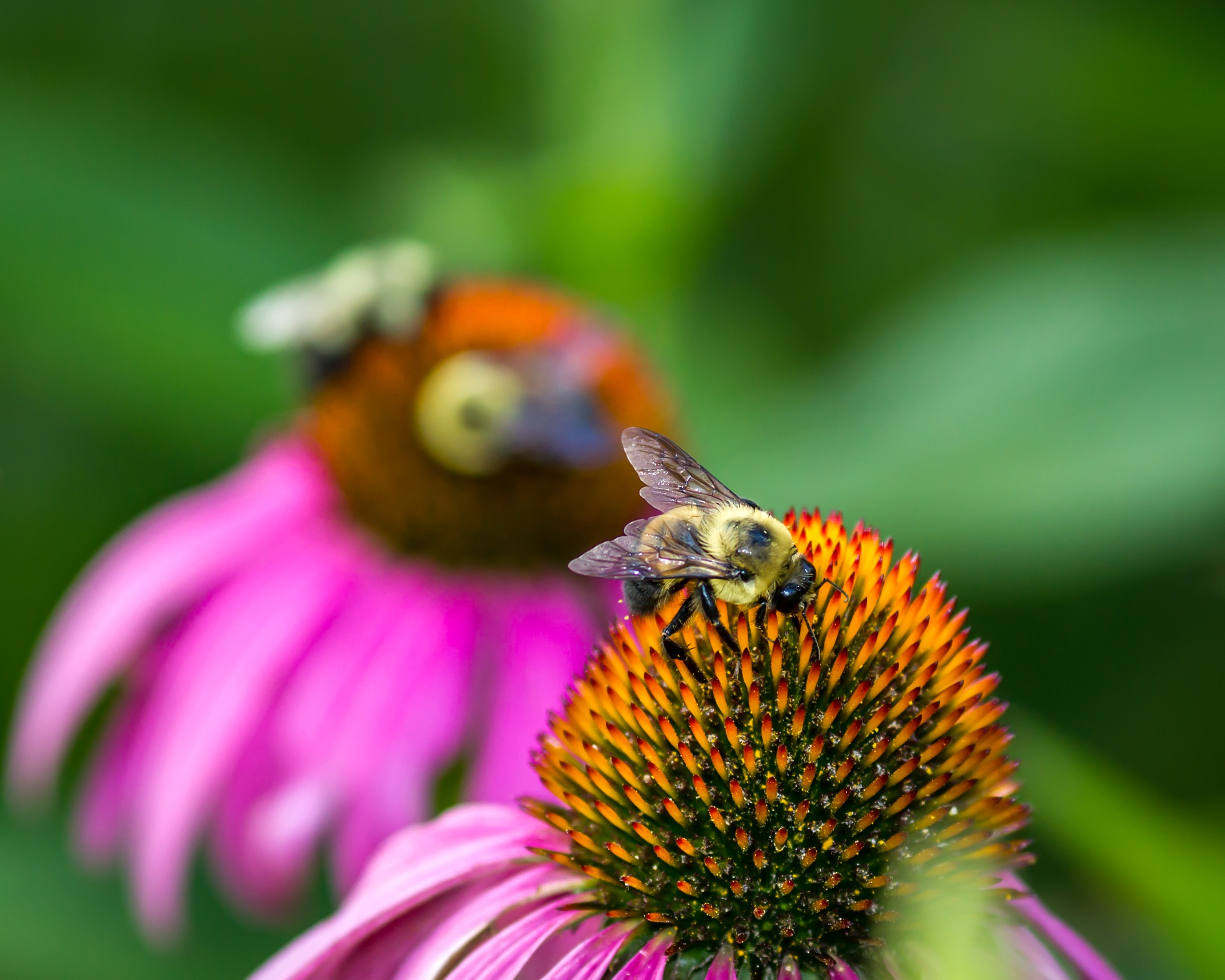 Busy Bee's of Freedom Park by MF - SyracuseLUX