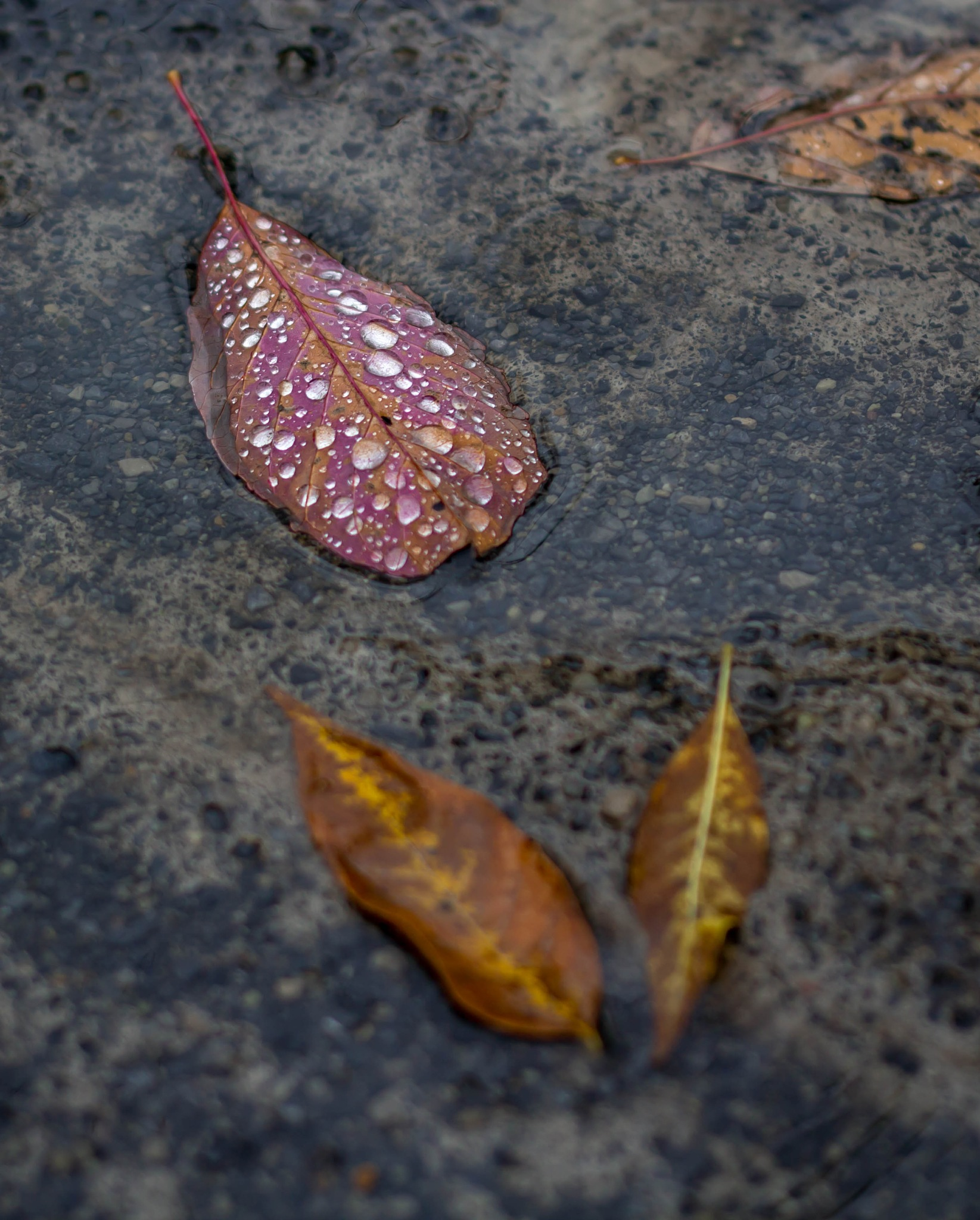 Fall colors as the rain drops by MF - SyracuseLUX