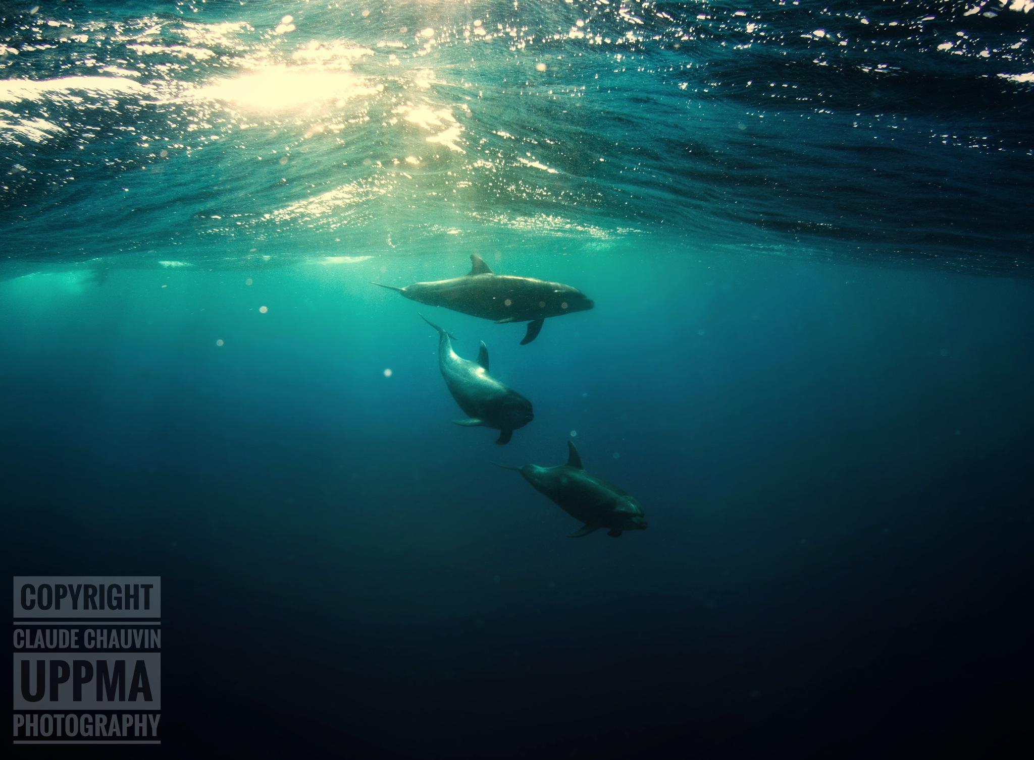 Underwater Silence  by claudechauvin67