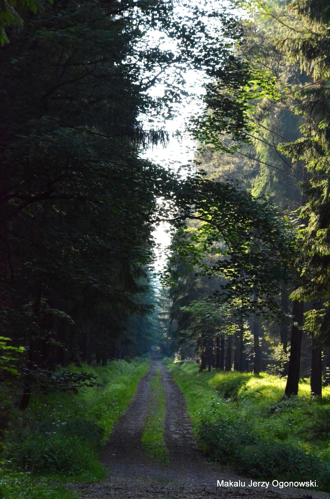 Forest in Poland .Lubawka Lower Silesia. by Makalu Jerzy Ogonowski